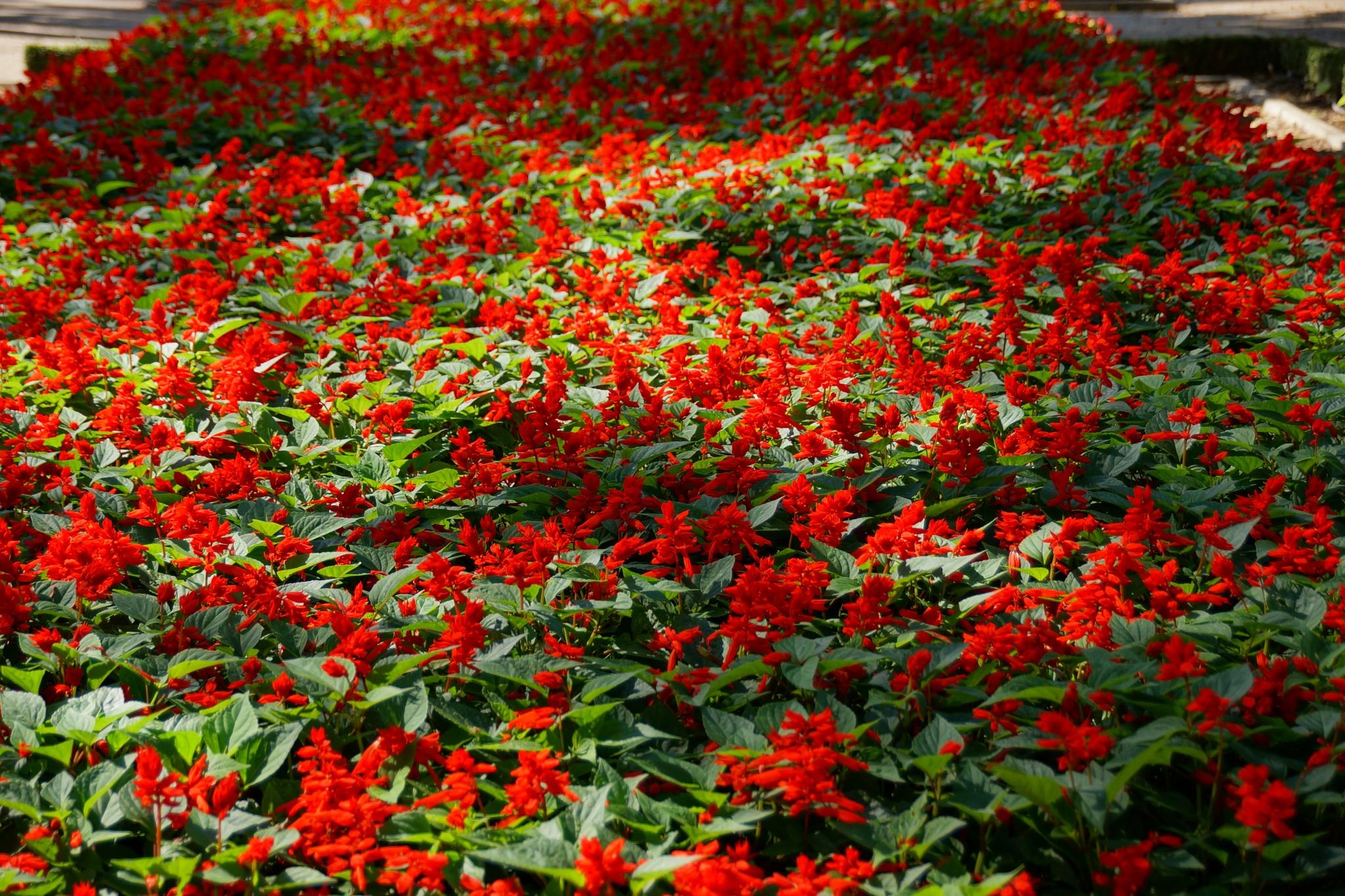 Sea of flowers by libol
