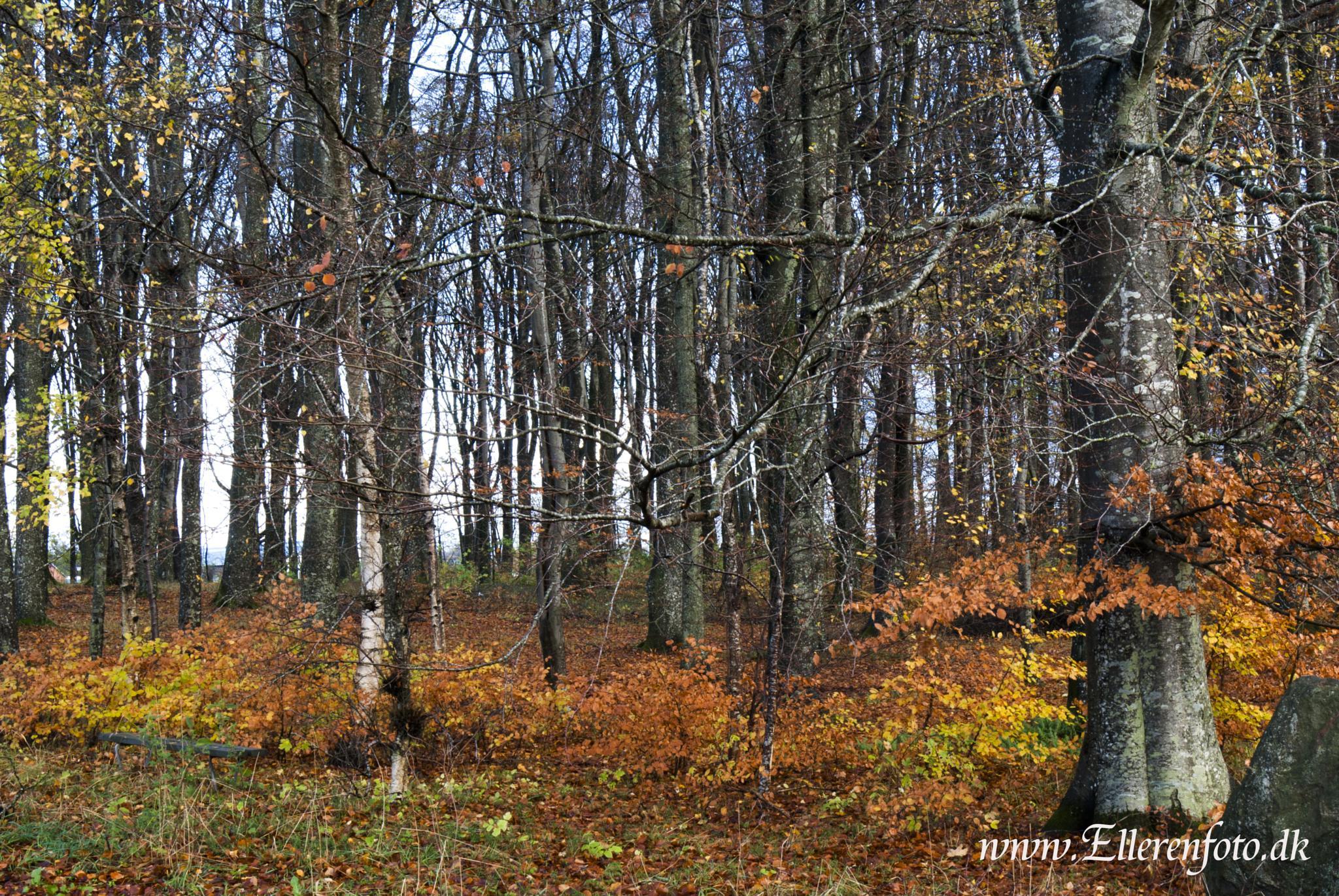 autumn colours by christian.elleren