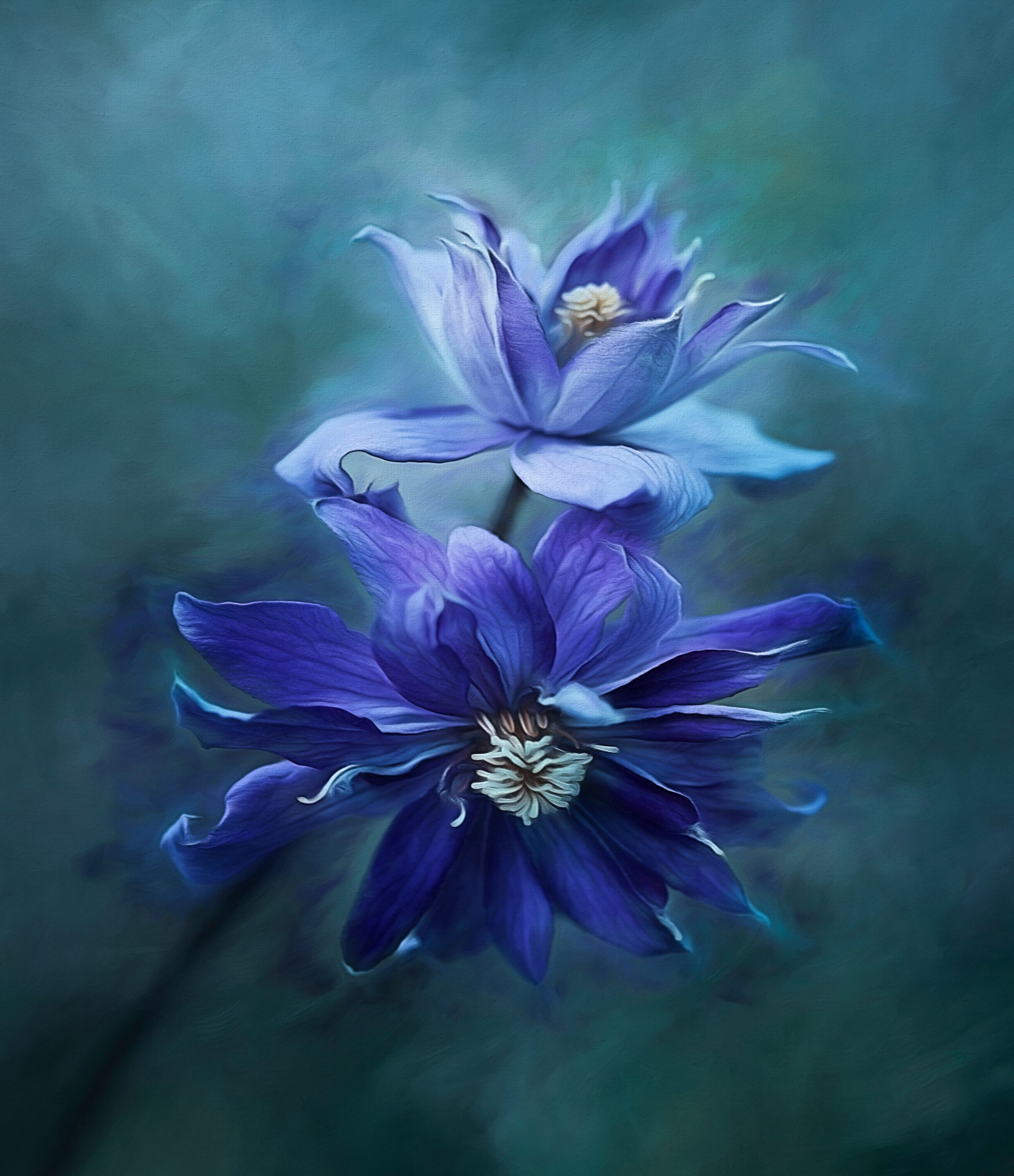 Clematis Blue by clinthudson
