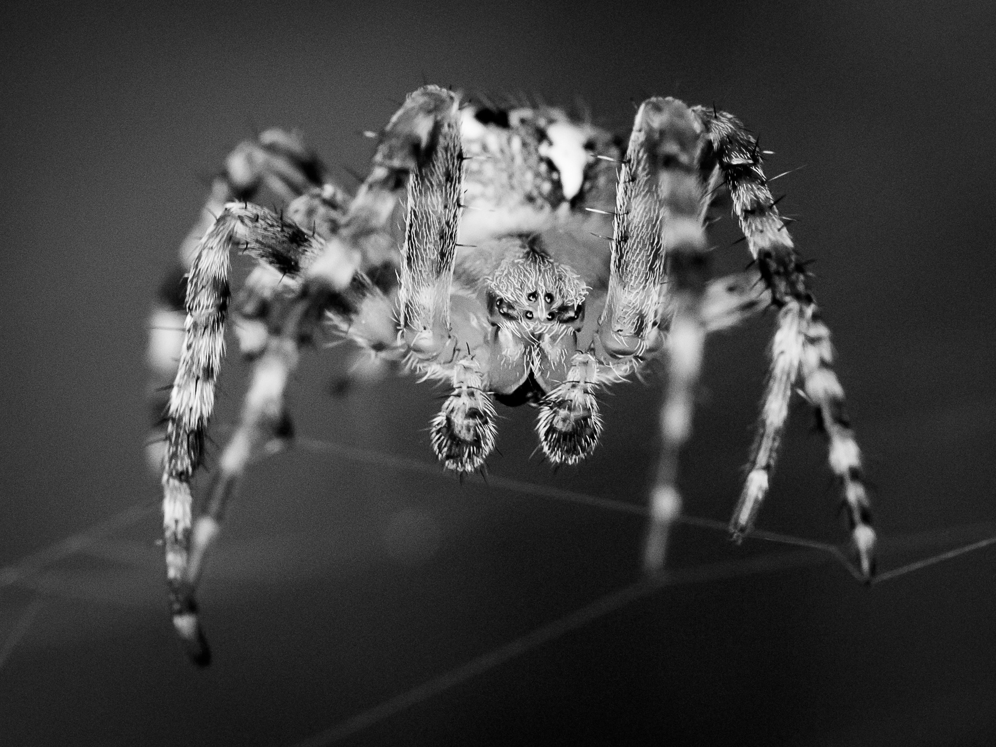 Spider... by Tom Andreasen