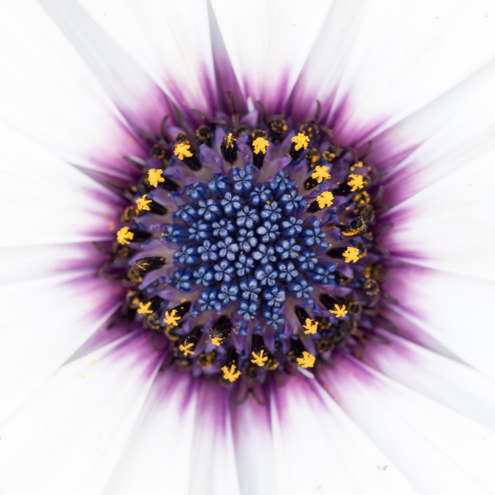 Flower power by Tom Andreasen
