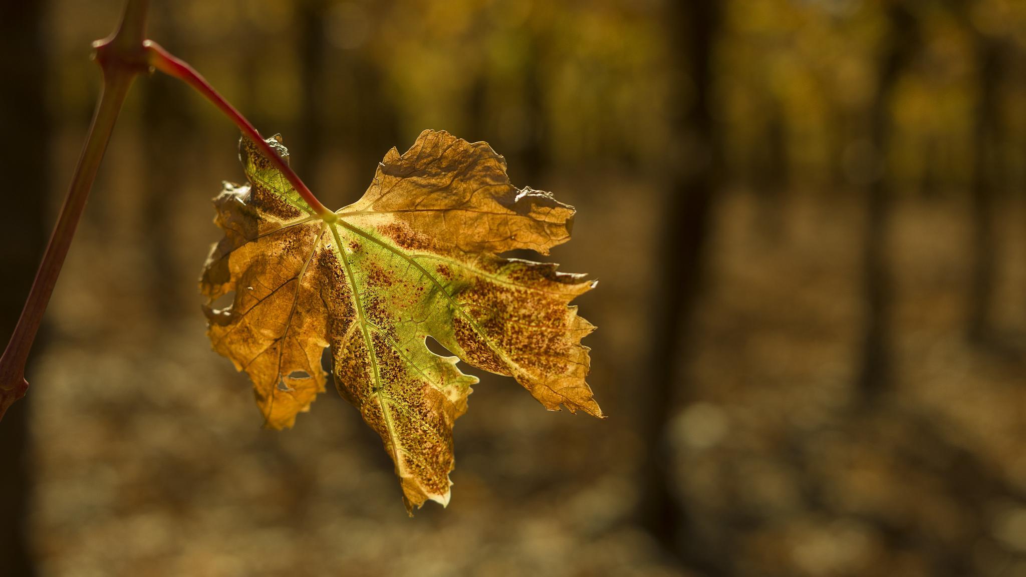 Autumn by cristian.negrus
