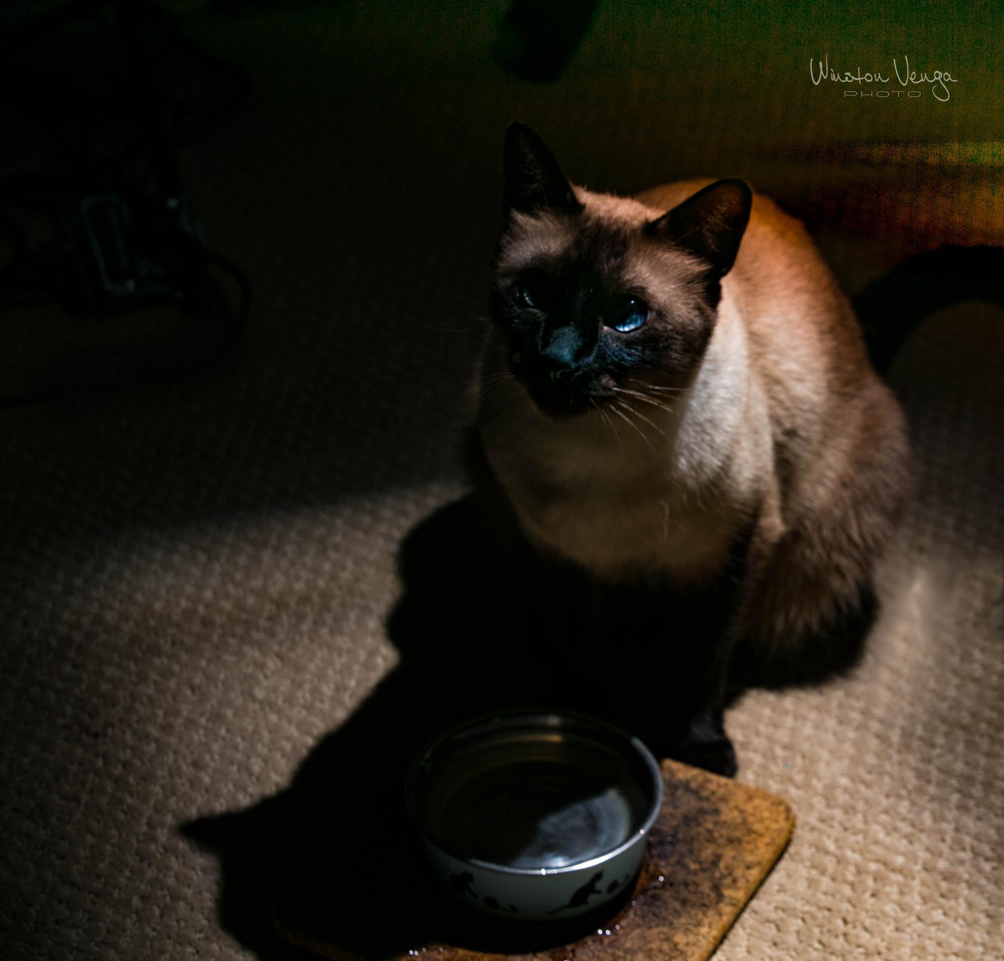 Gato (Teddy) 2 by Winston Venga