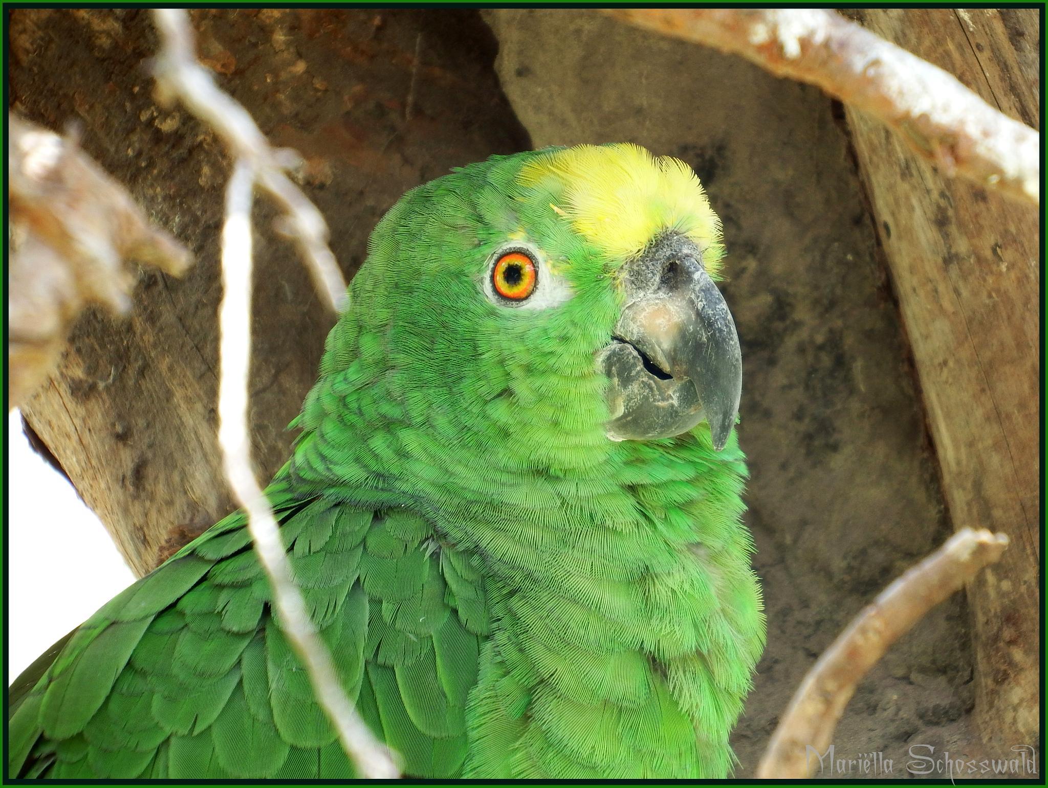 parrot by Mariëlla van der Lans-Schosswald
