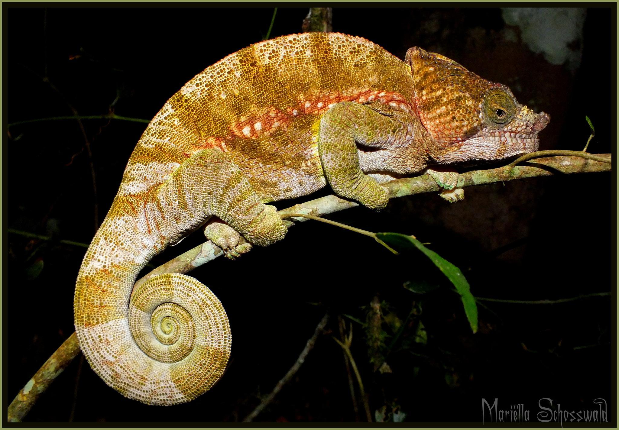chameleon by Mariëlla van der Lans-Schosswald