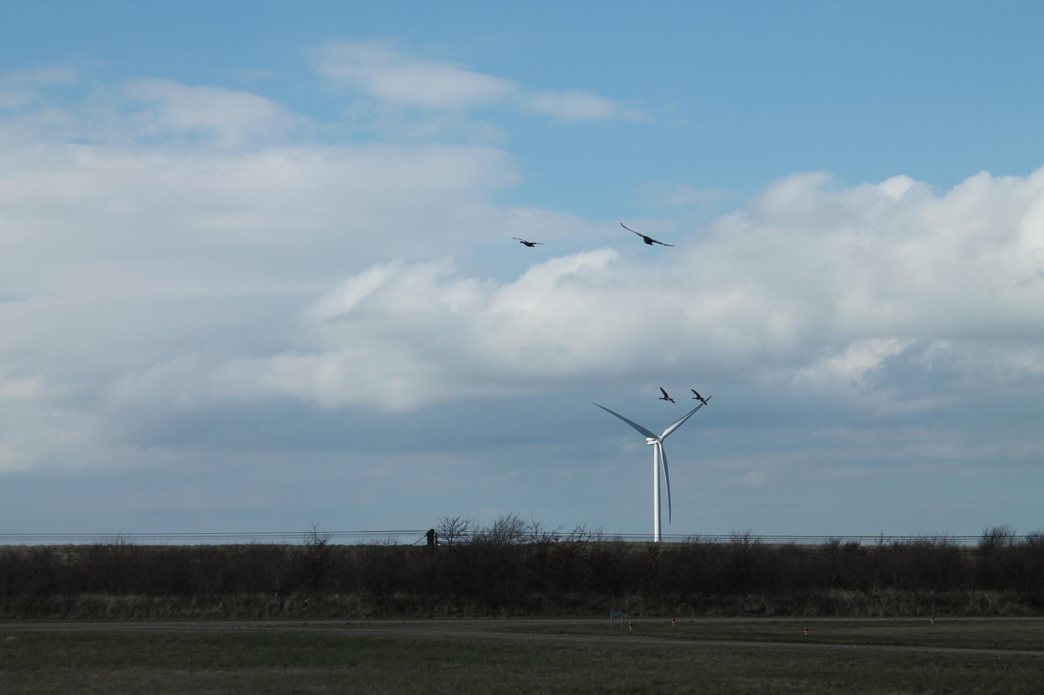 Green Energy by ove.gram