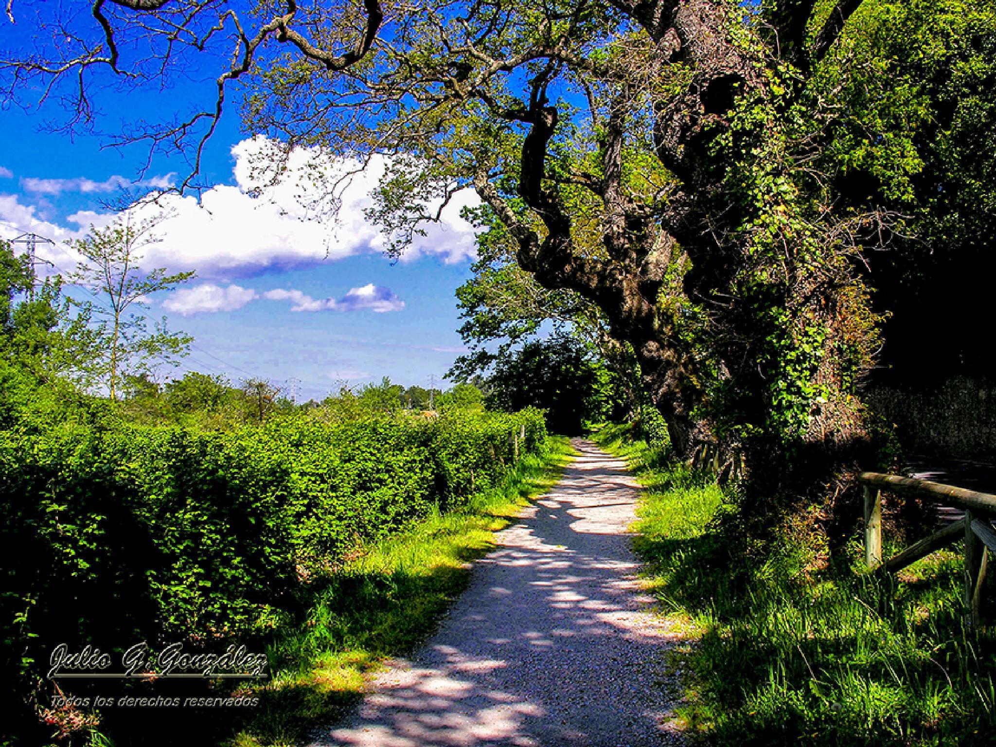 Camino rural en Deva (Gijón) by Julio G.González