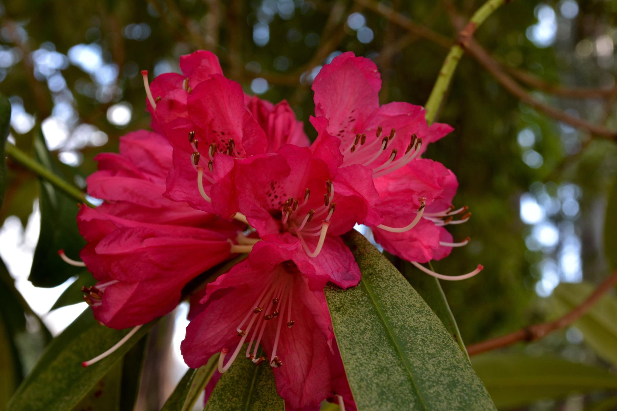 Red Flower by Daniel A Robb