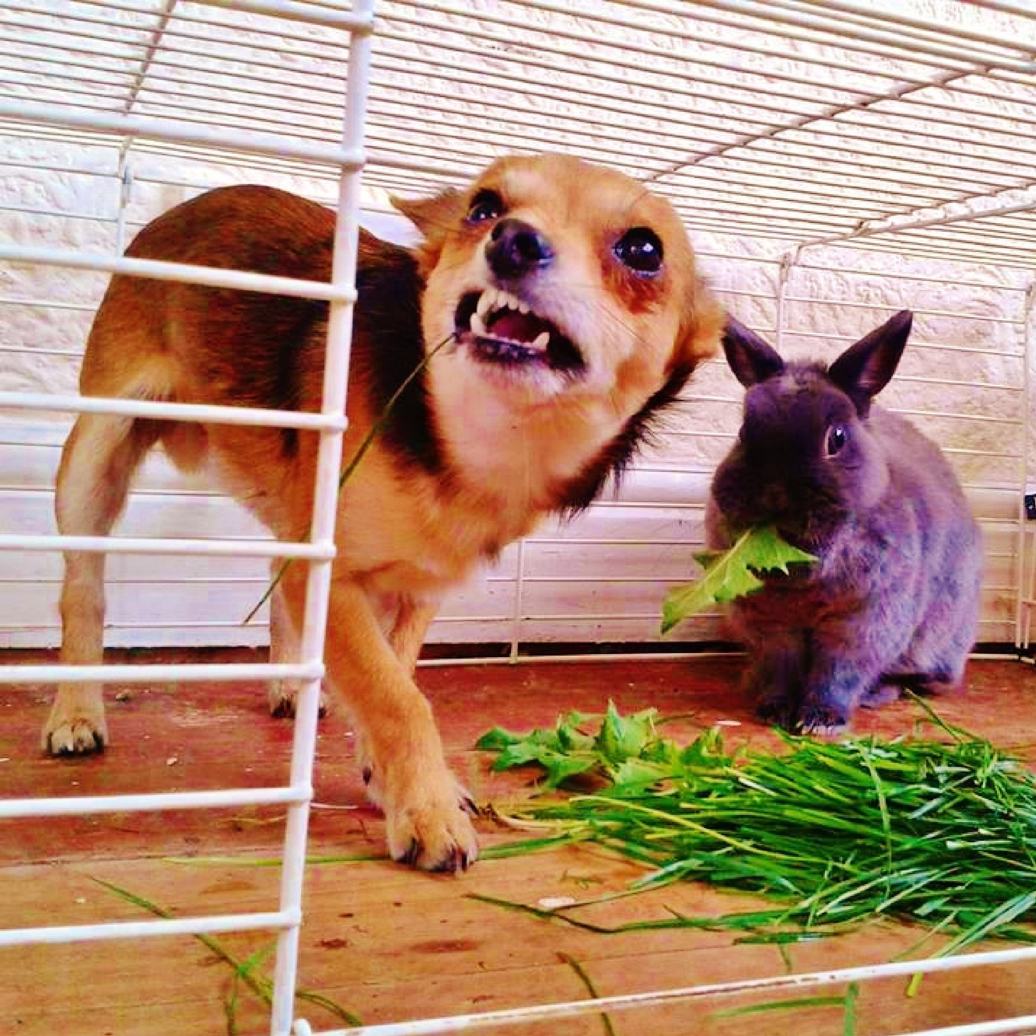 Bunny Bodyguard by mandi.n.matt