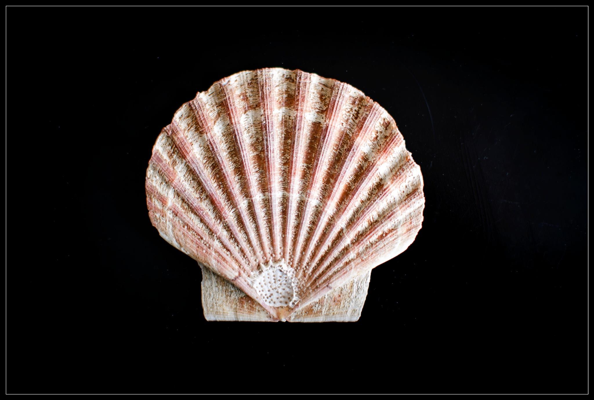 Shell  by ad.kesteloo