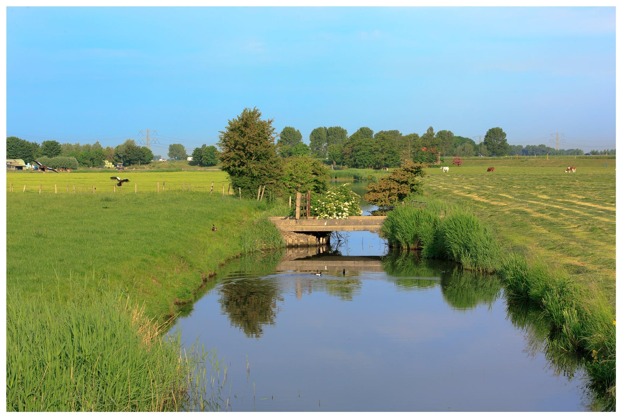 Voorne Putten Landscape by ad.kesteloo