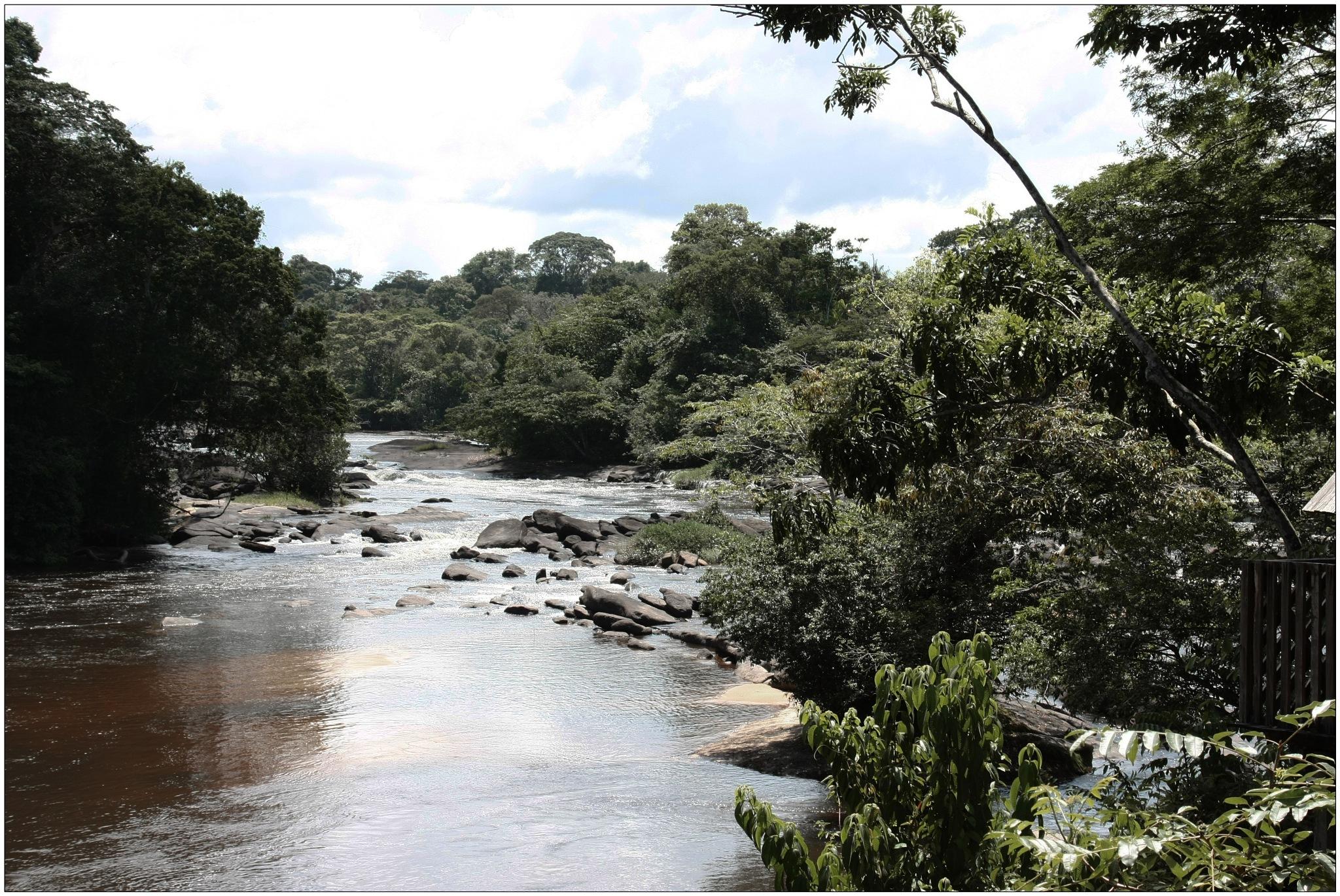 Surinam bush- river by ad.kesteloo
