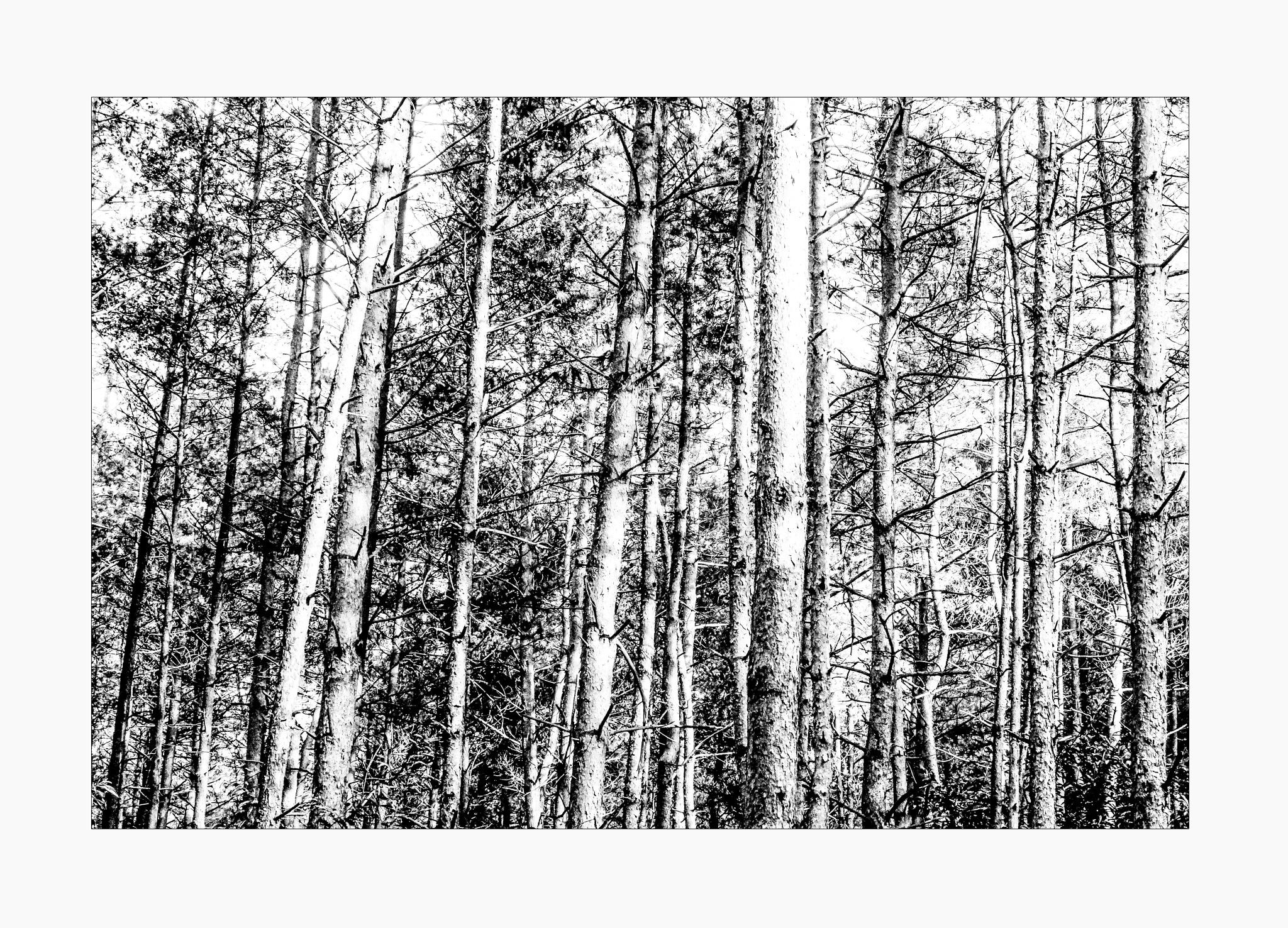 trees in monochrome by ad.kesteloo