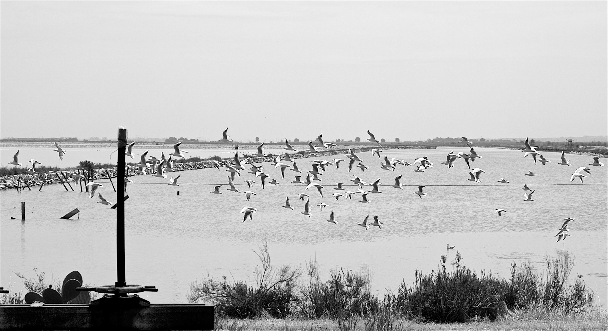 Seagulls by paolotomaselloct