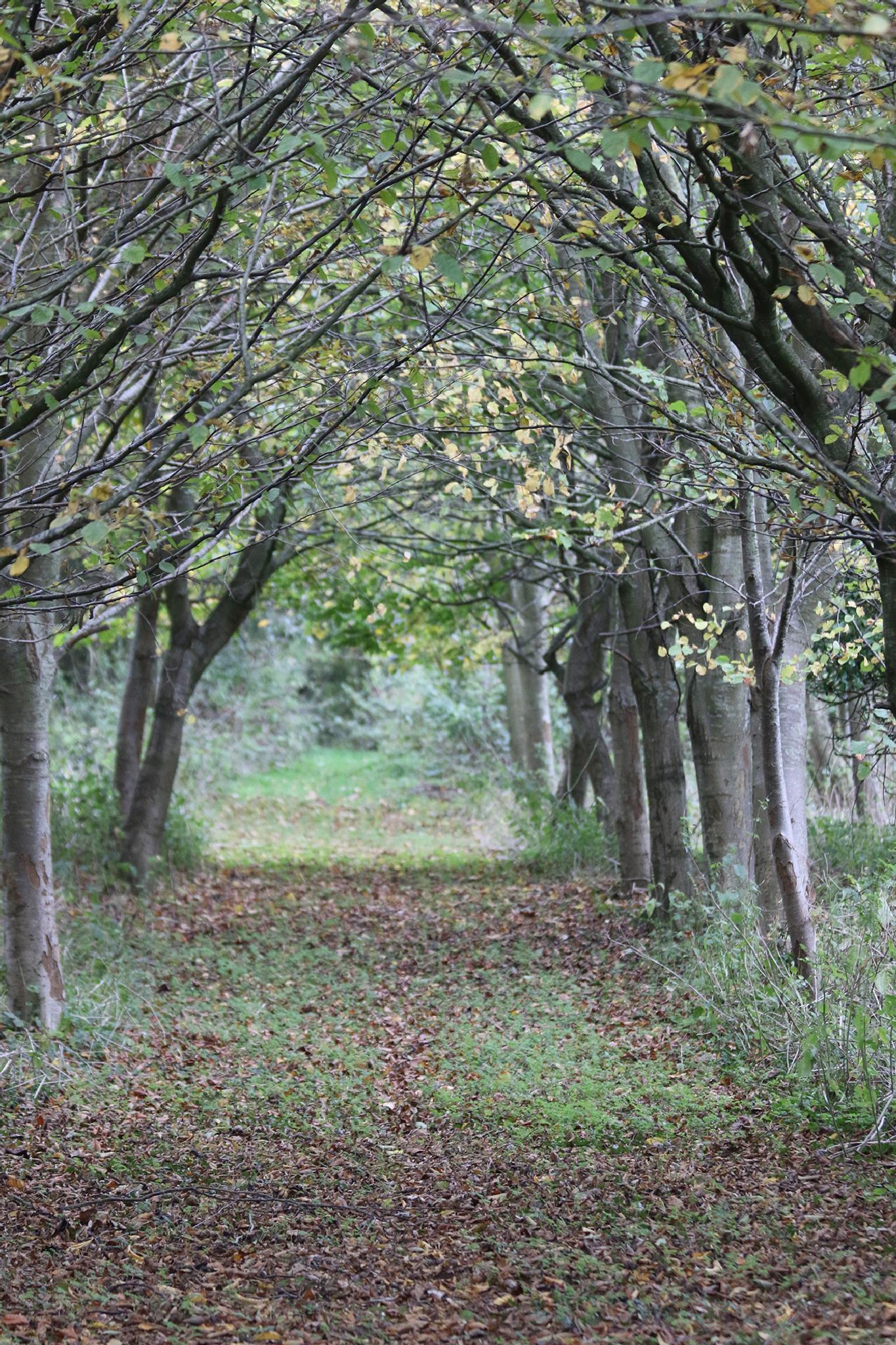 Cheery Tree Drive by keith.markillie