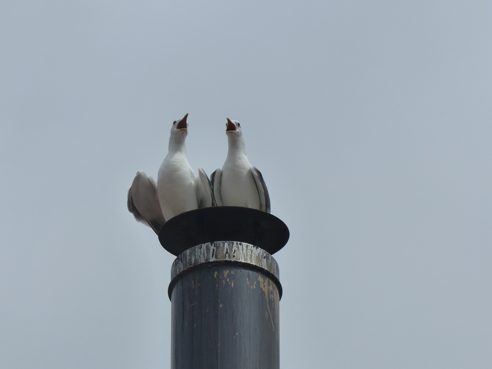 Sea gulls 'in concert'  by Lars M.