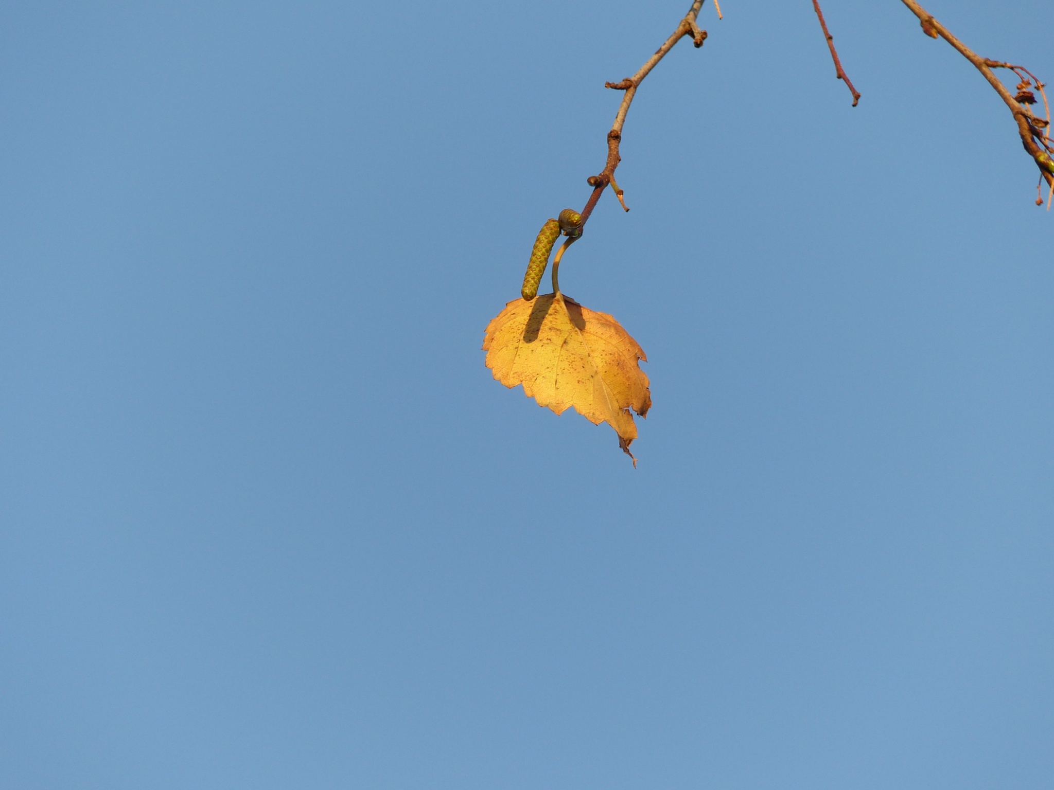 Birch leaf on wonderful October morning by Lars M.