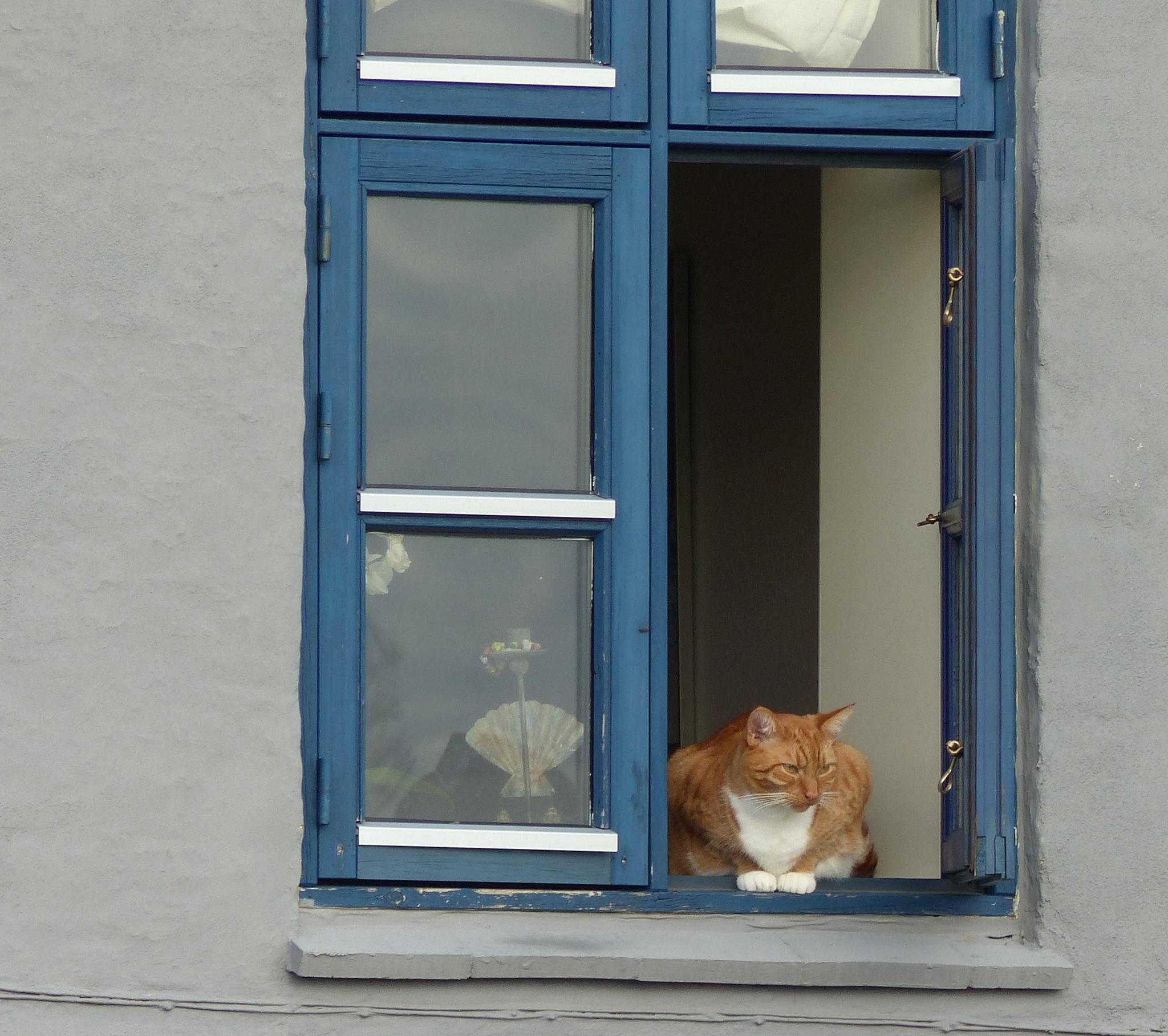 My neighbour across the street by Lars M.