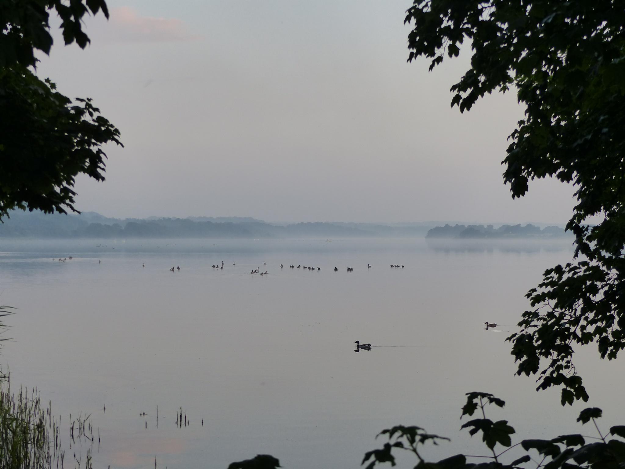 Misty evening by Lars M.
