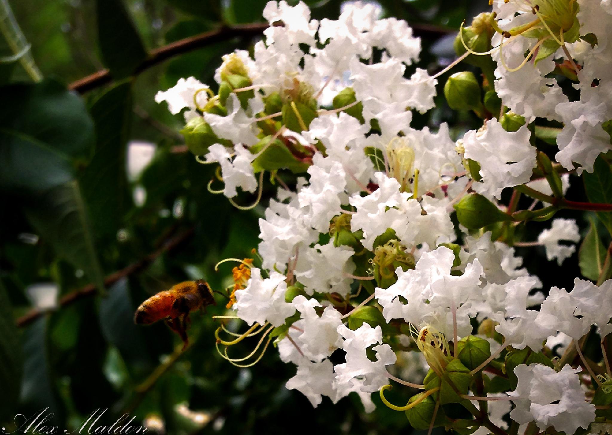 Buzzy Bee  by amaldon
