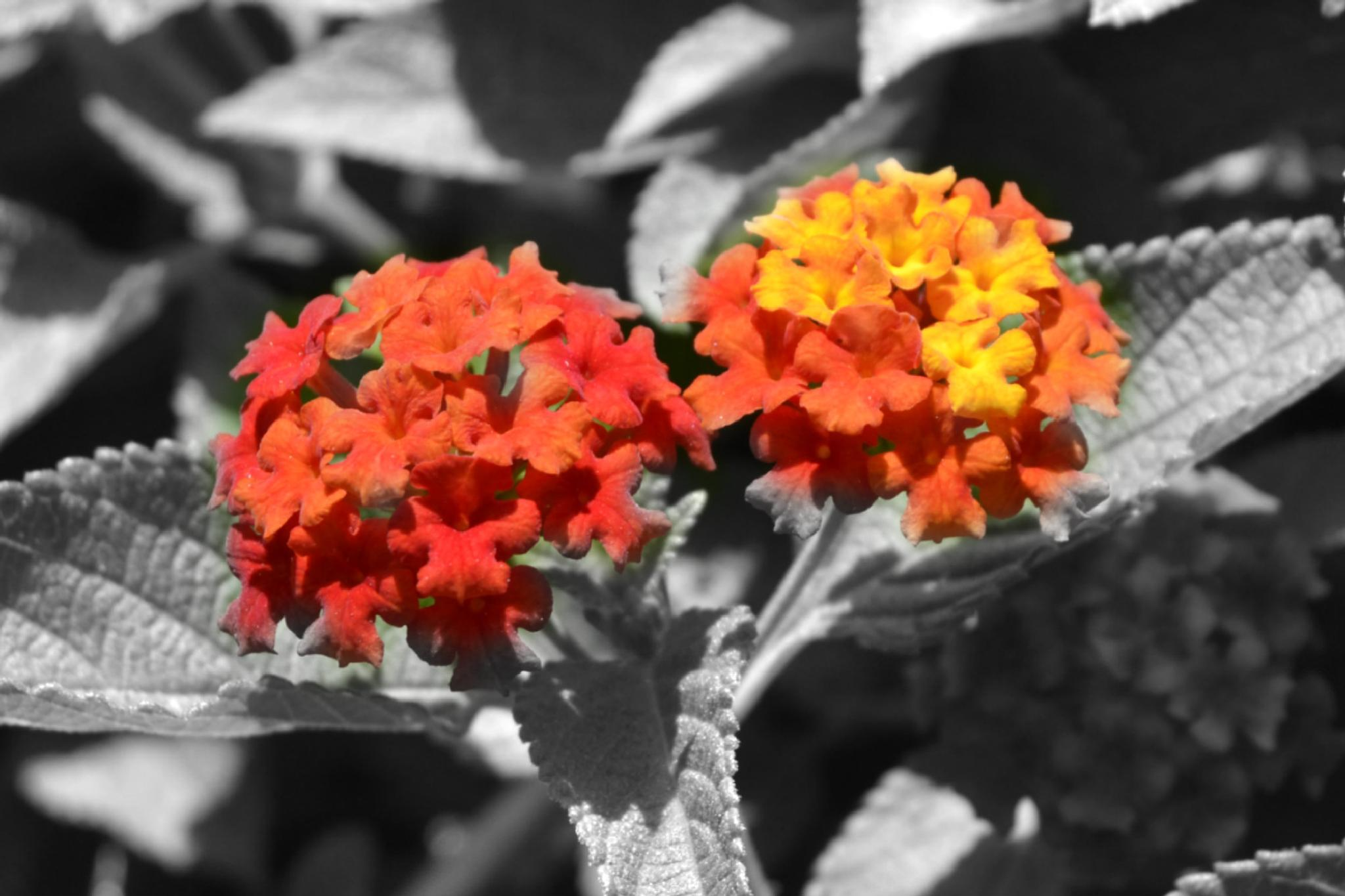 Colors Of Flowers  by PRasad Ahirrao