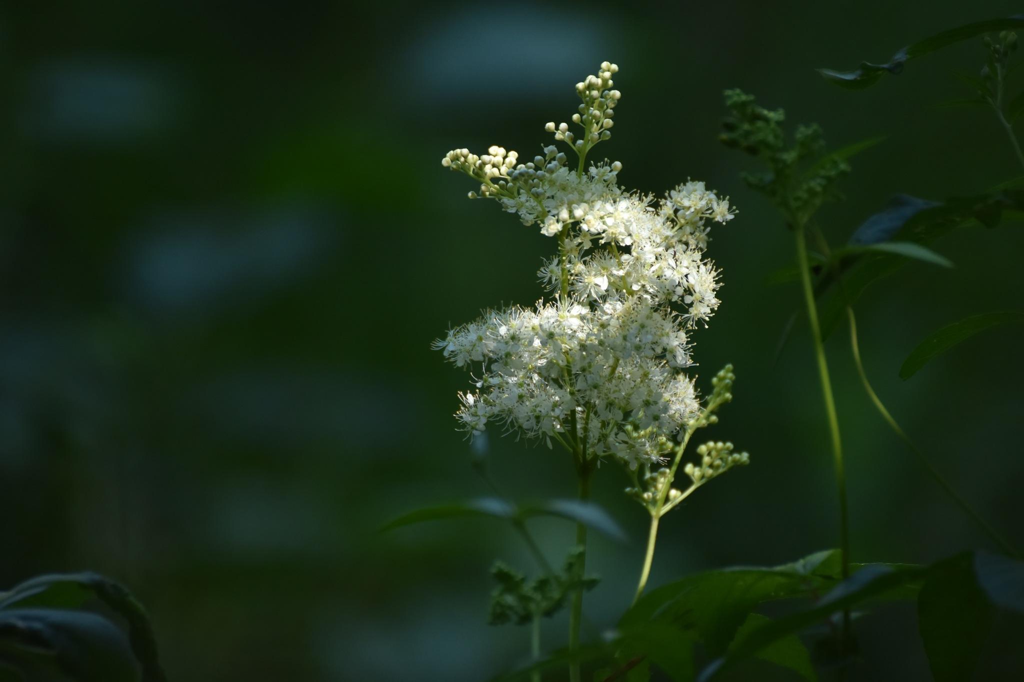 Flower by monica.westerholm.5