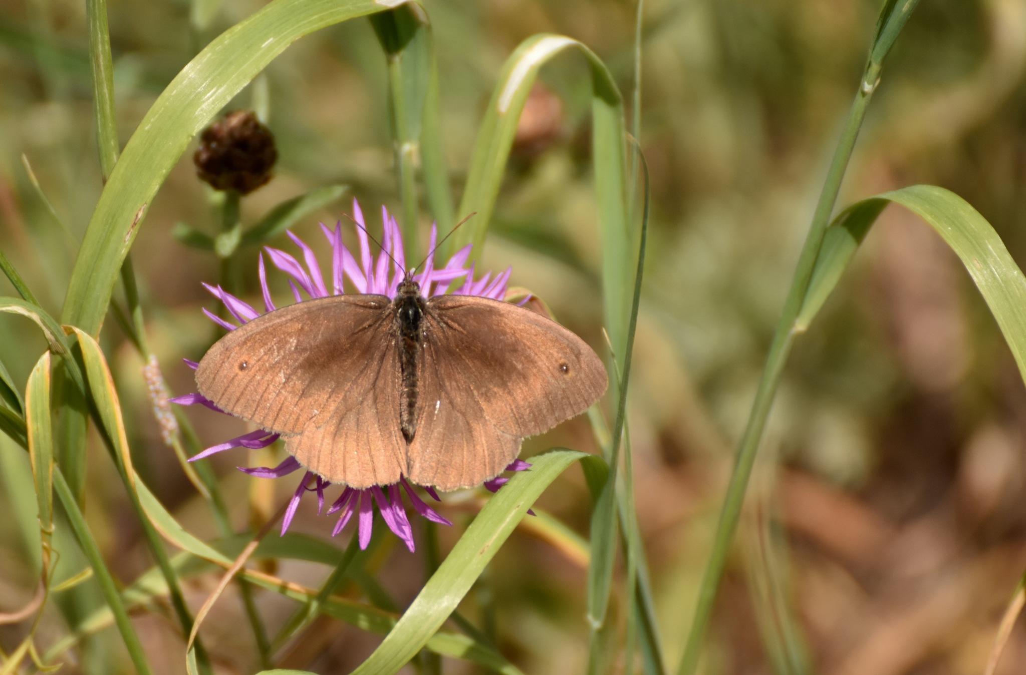 Butterfly by monica.westerholm.5