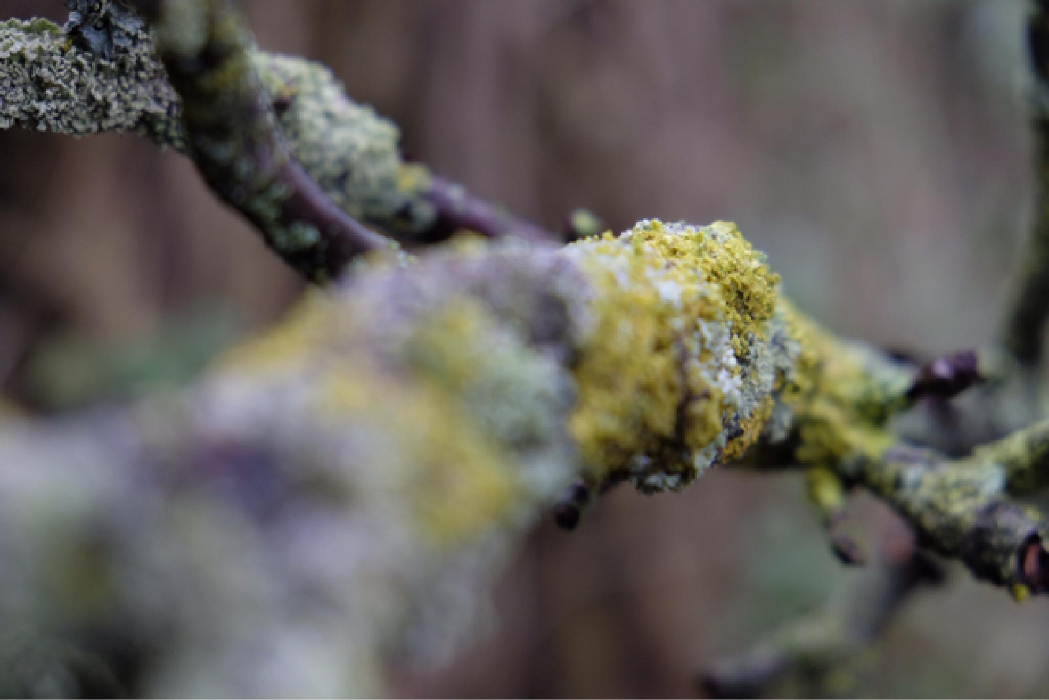 moss by lesley.rudram