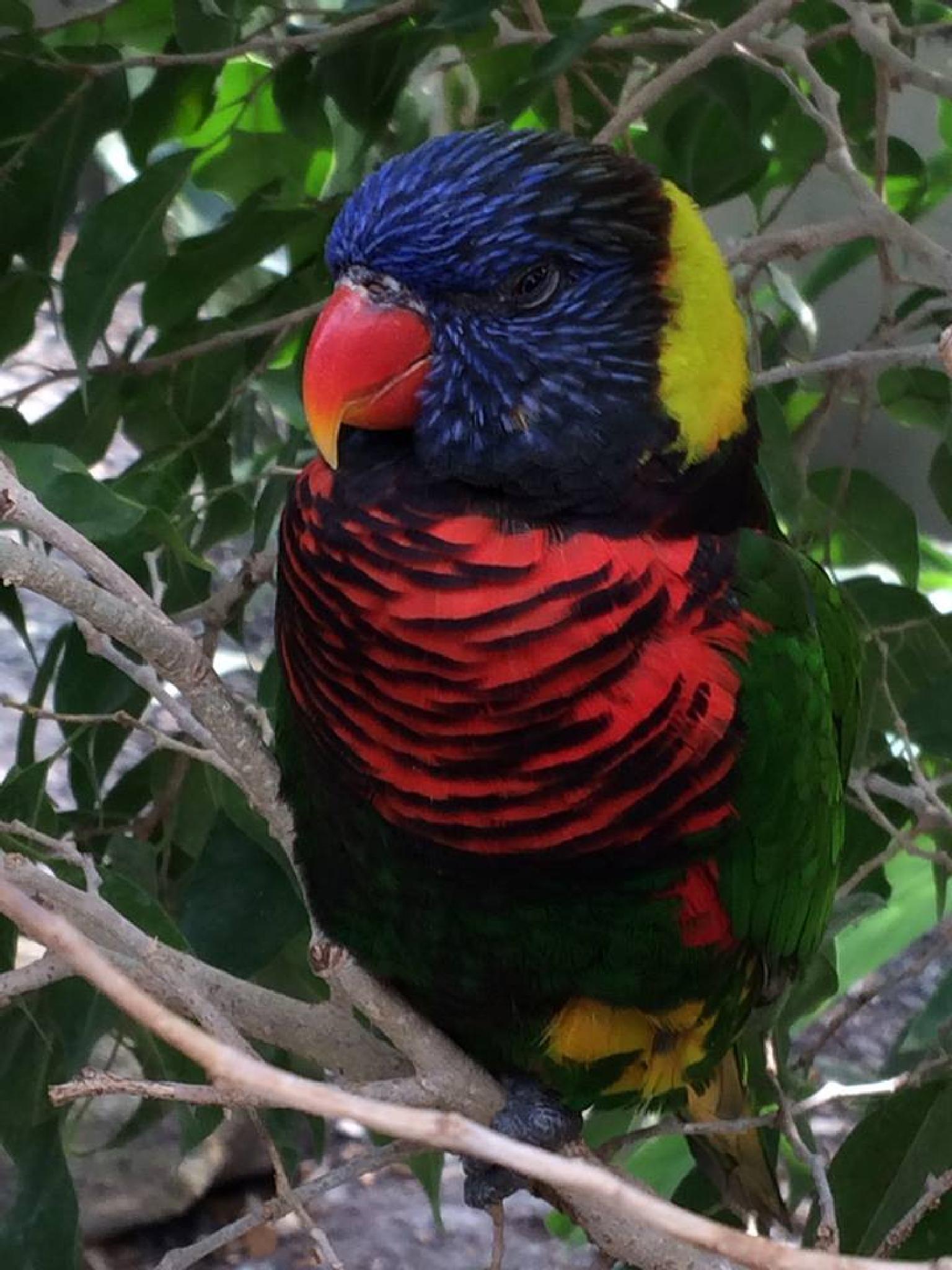 colorful bird by sonya.f.kennedy