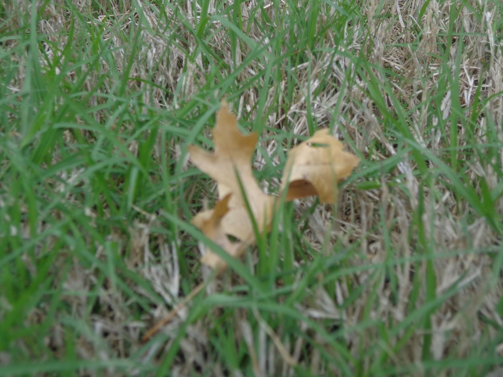 leaf by mwainaina205