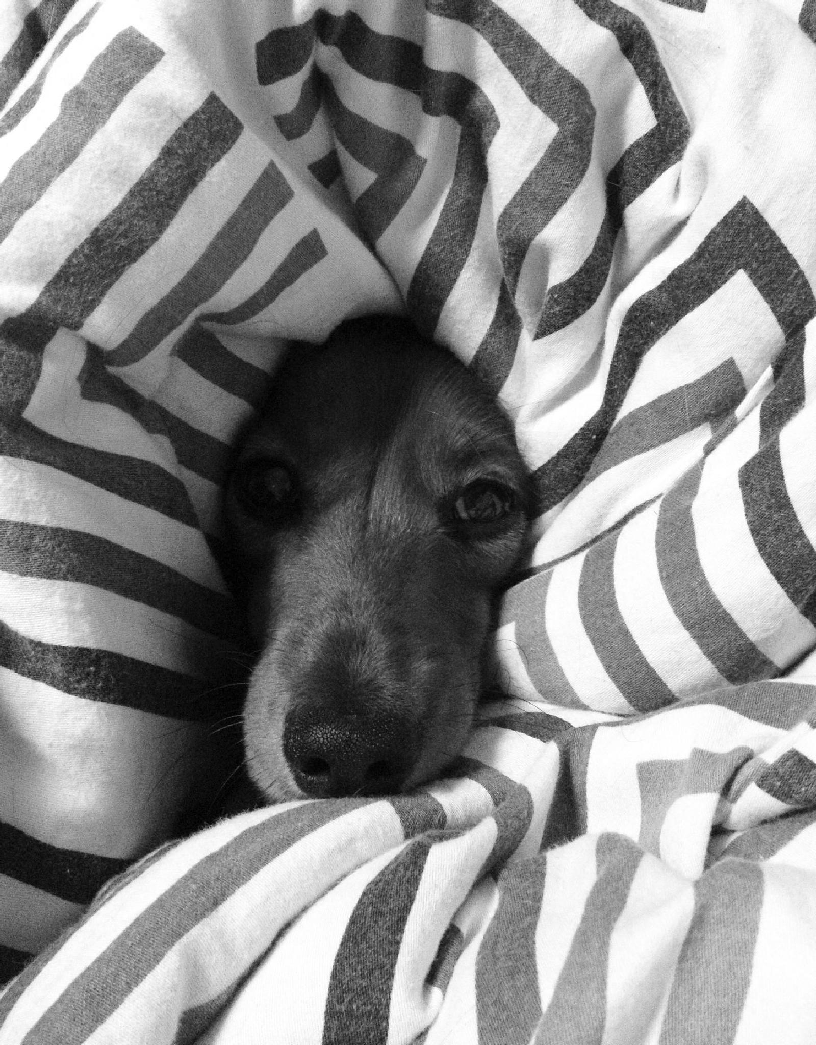 puppy by Katrīna Kraukle
