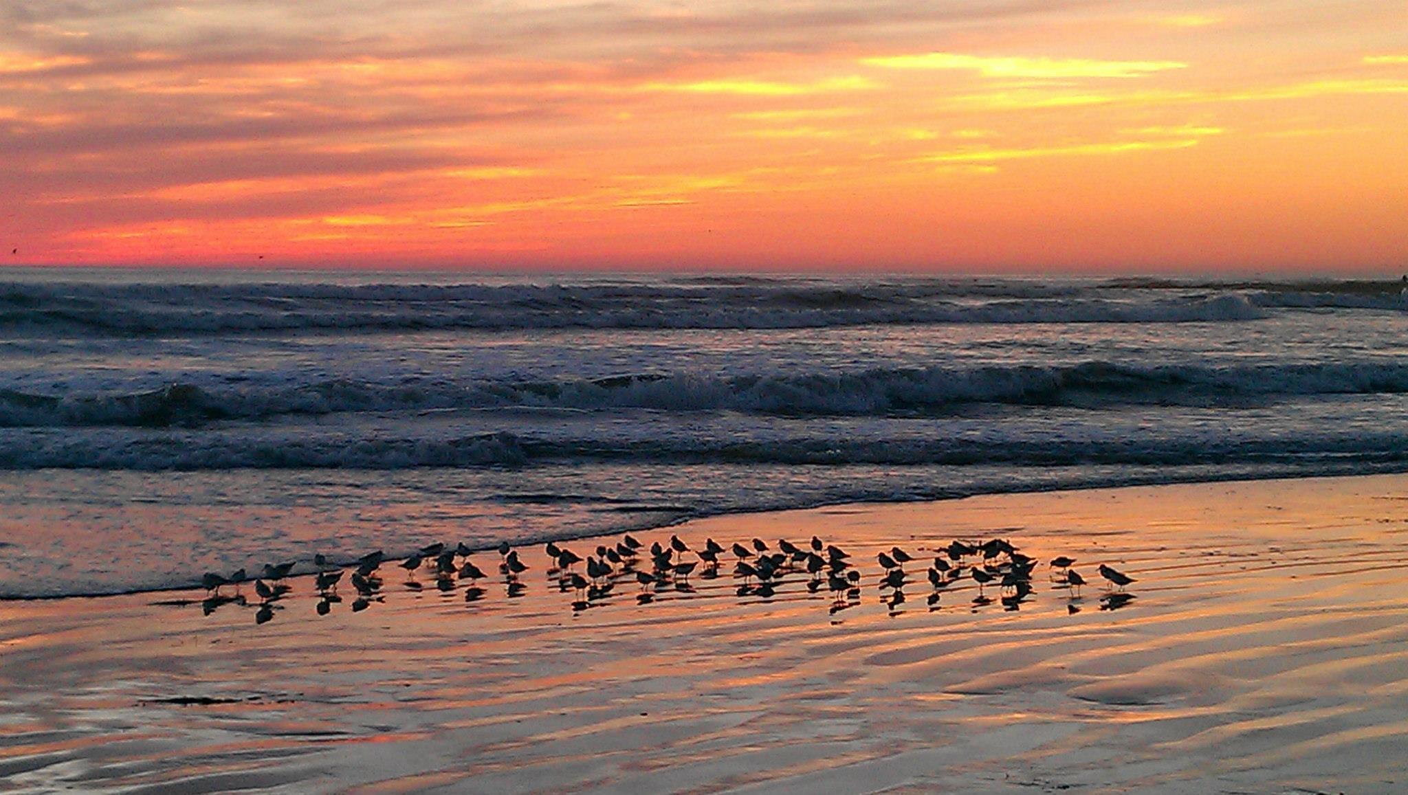beach birds by jodi.thrasher1