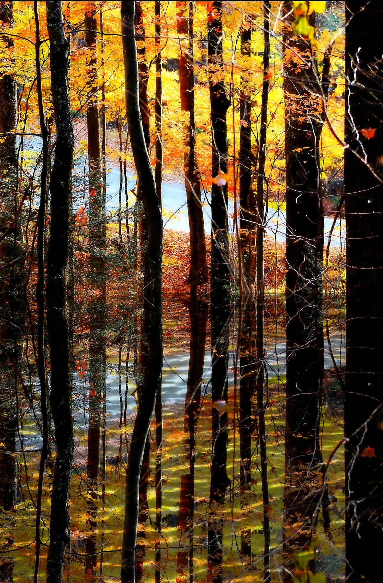 Forrest Reflections by darlenehoneycutt