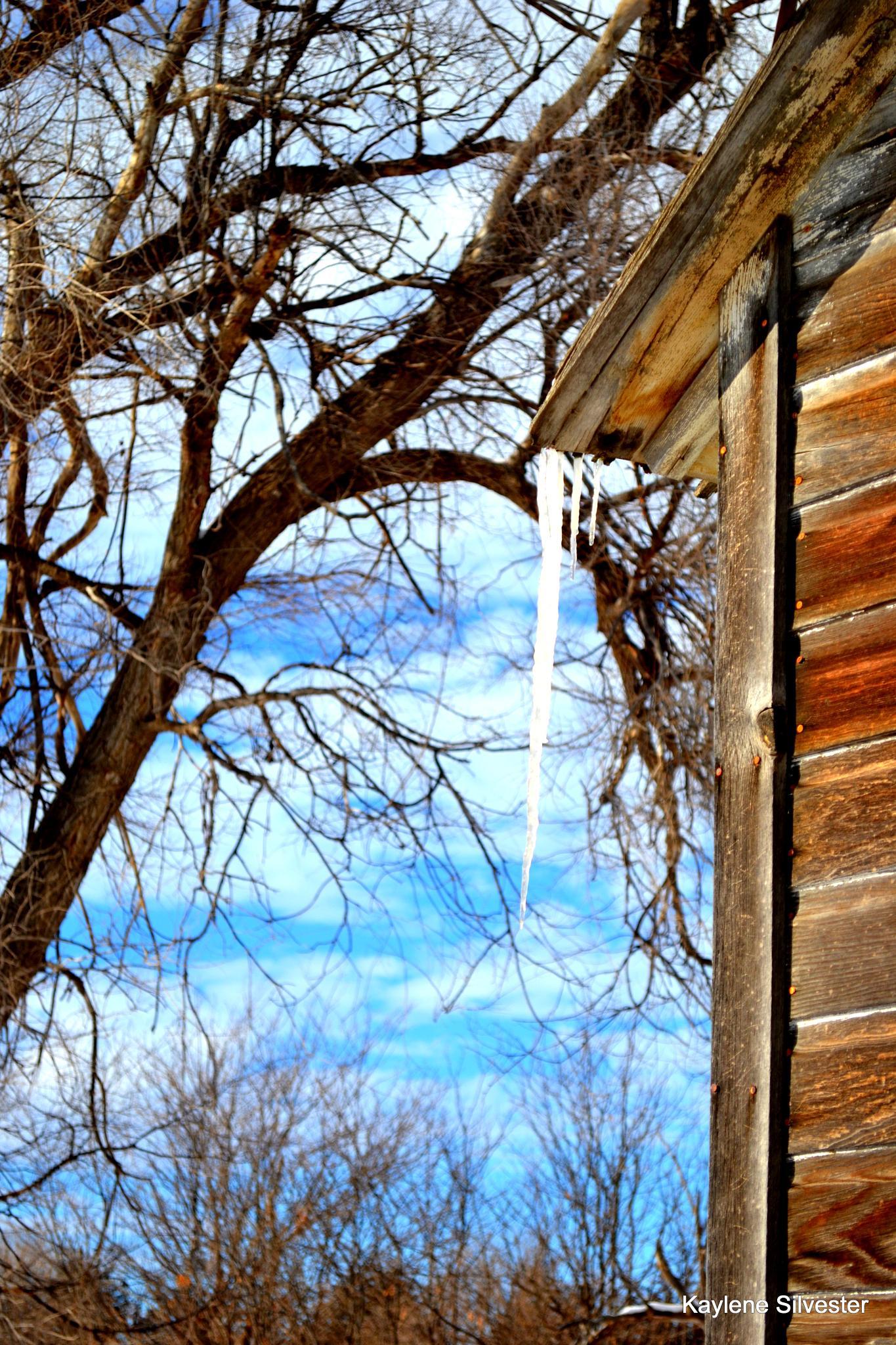 Icicle on old house by Kaylene L Silvester