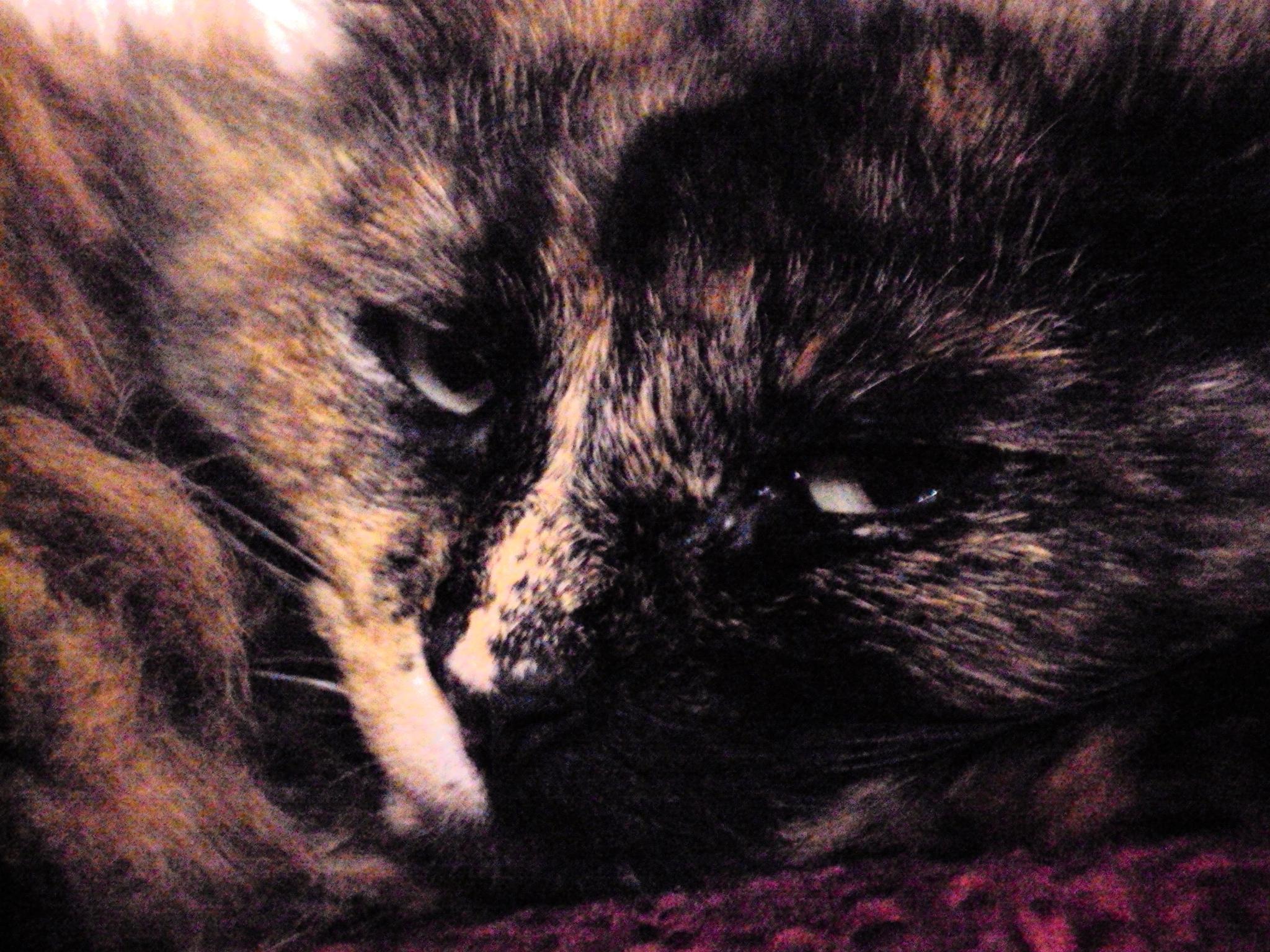 Sleepy kitty by Mahnaz & Yelda