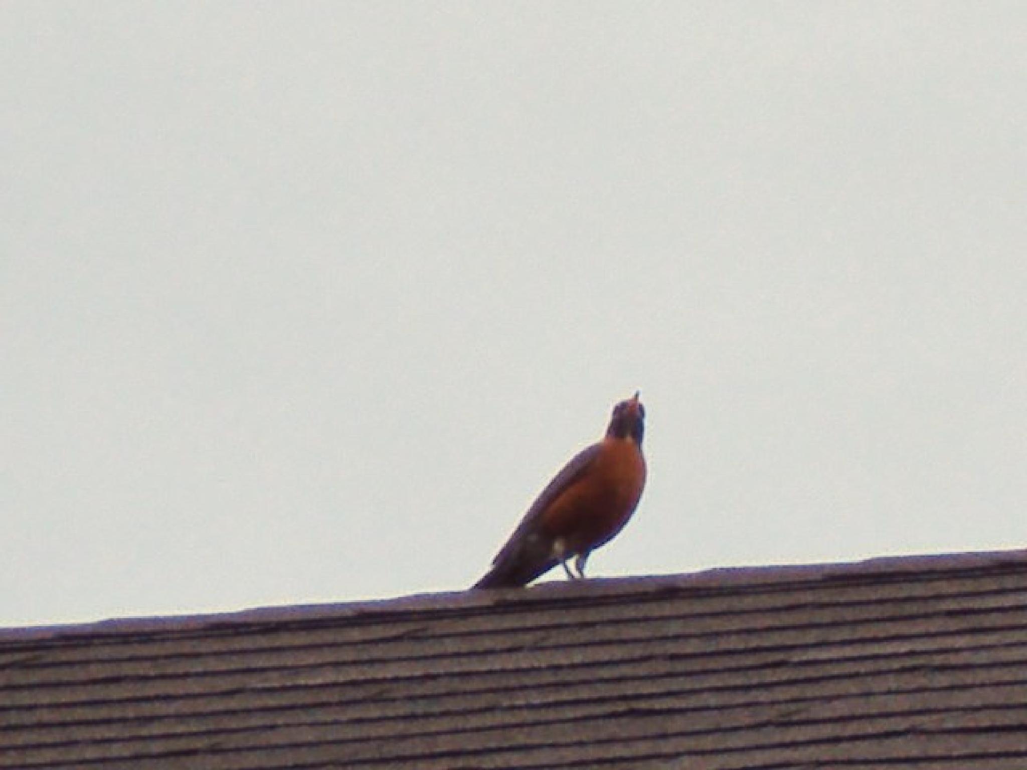 morning visitor by Mahnaz & Yelda