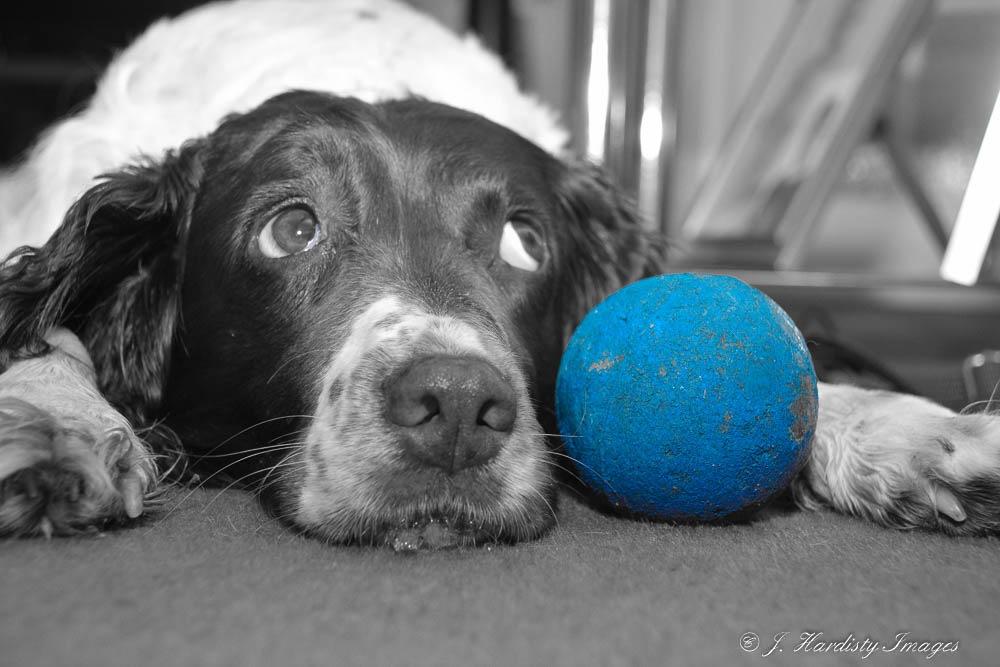The Ball by judithhardisty9