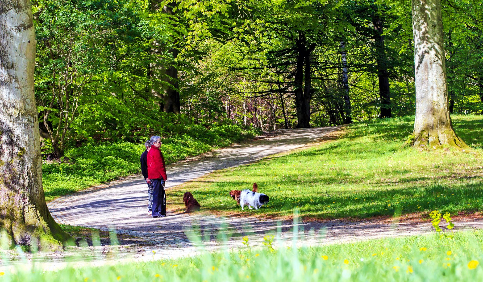Dog Walkers by M. Loeth