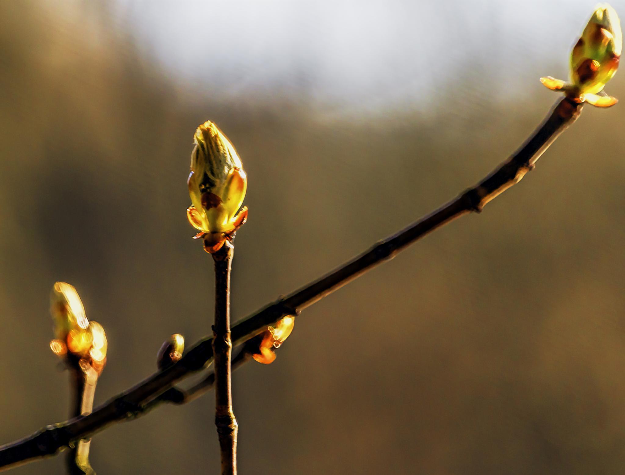 Just before spring arrives by M. Loeth