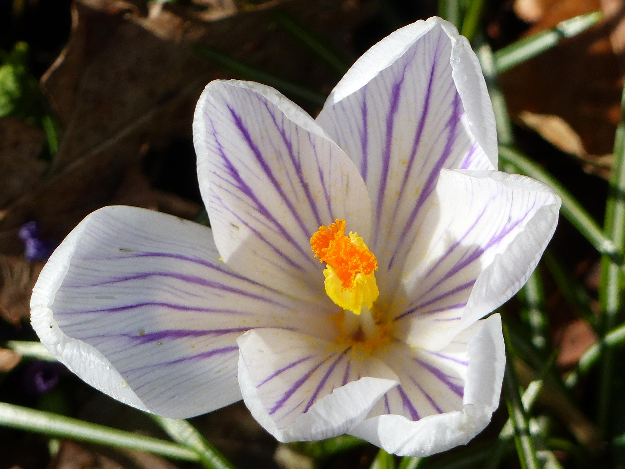 Spring has arrived in Balcombe West Sussex by Malc Thomason