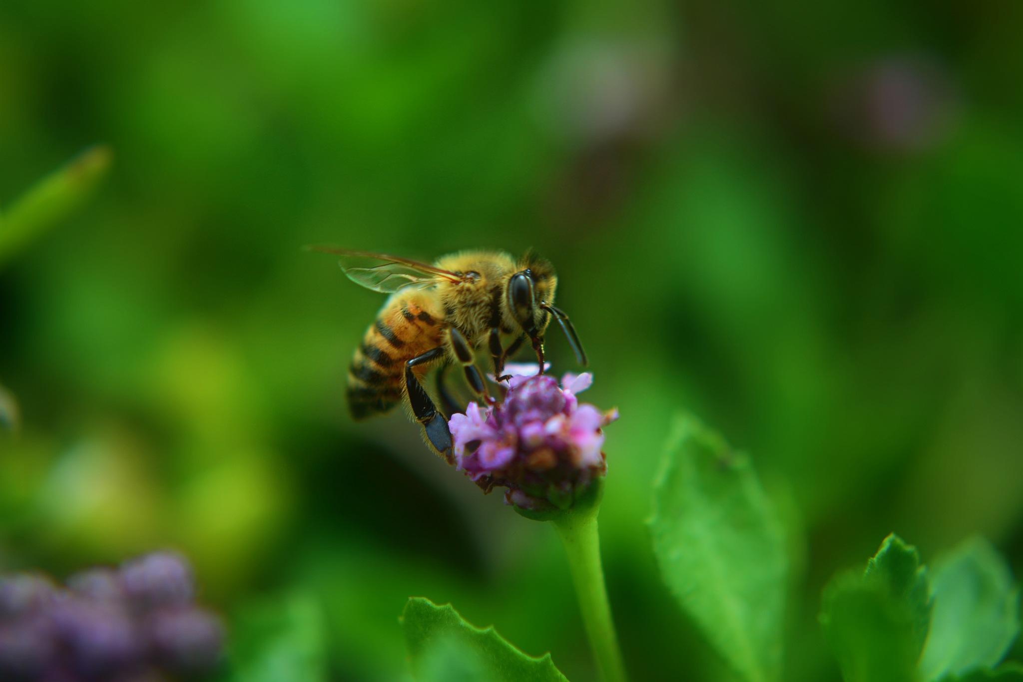 Bee by Solomon Aseoche
