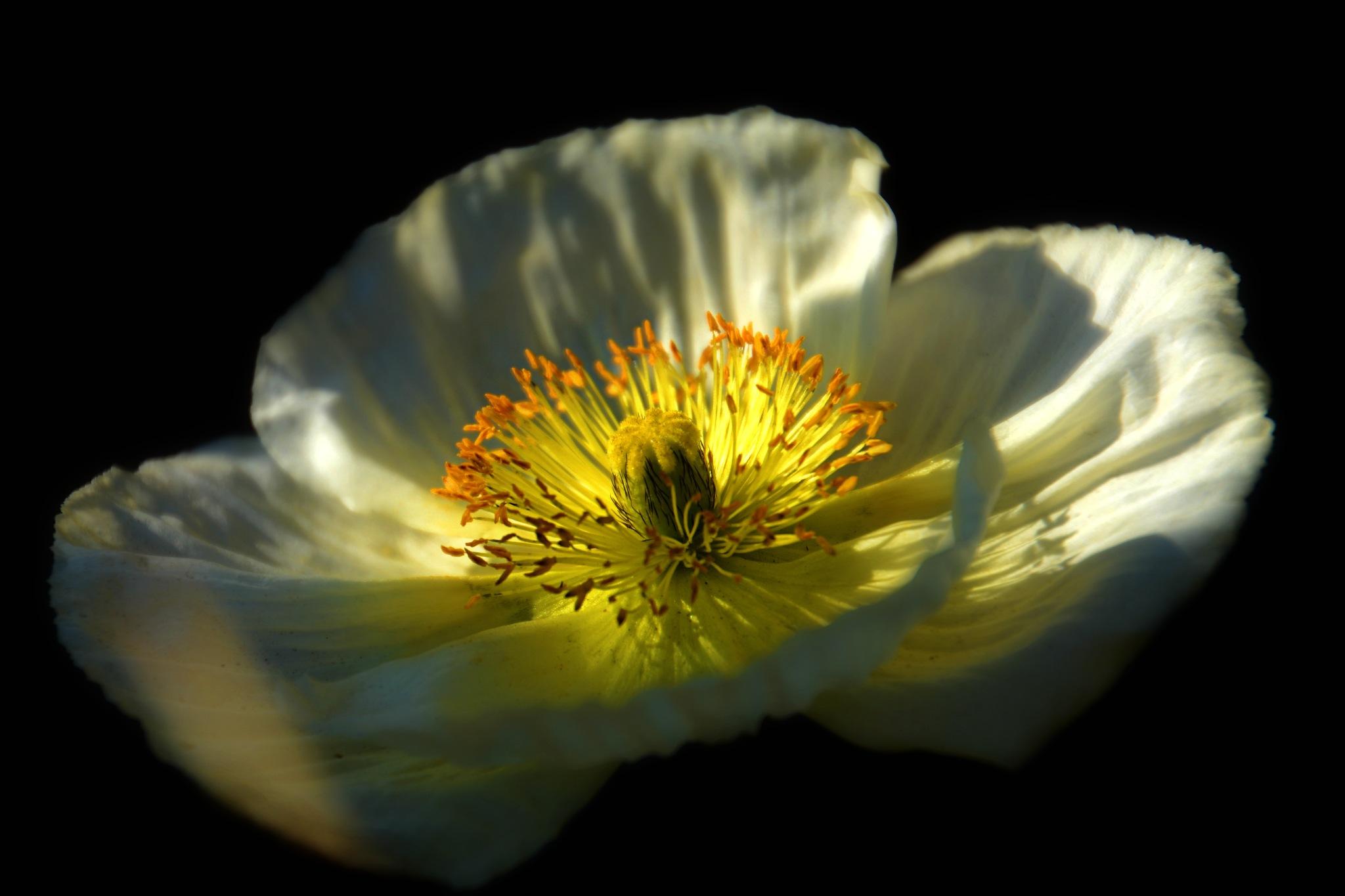 Flora In The Dark by Solomon Aseoche
