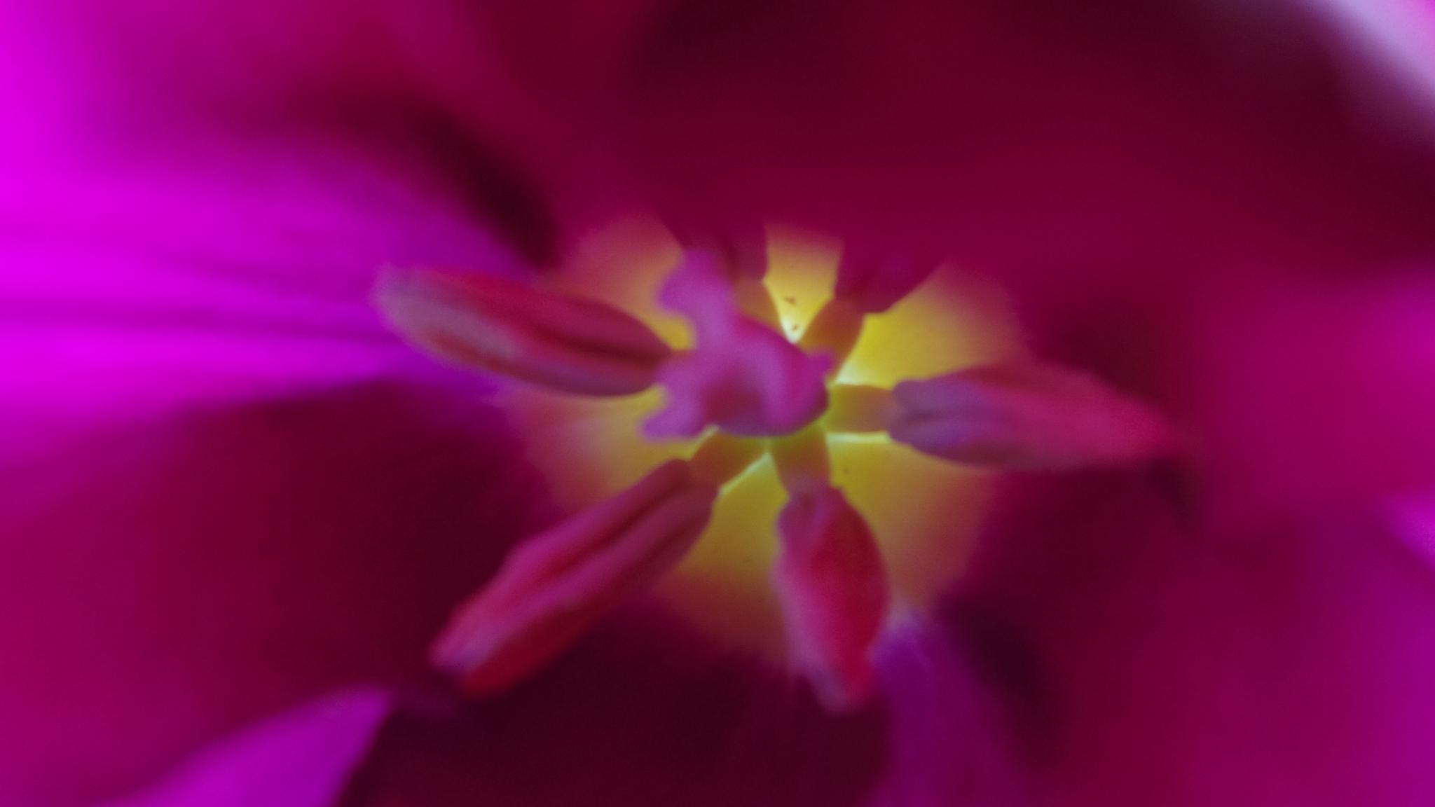 Inside the Tulip by Penelope Bailey