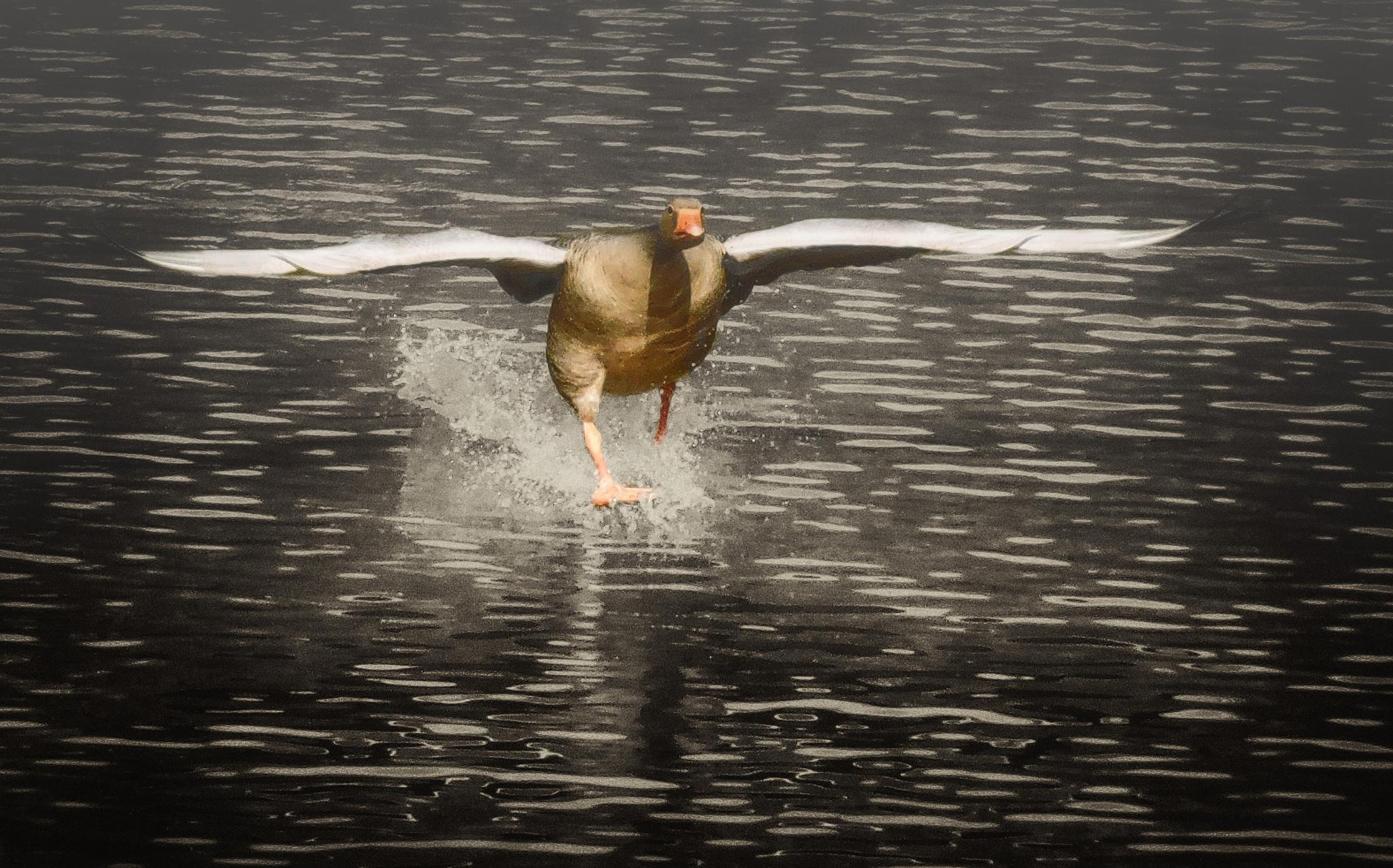 Soft landing by FranklinB
