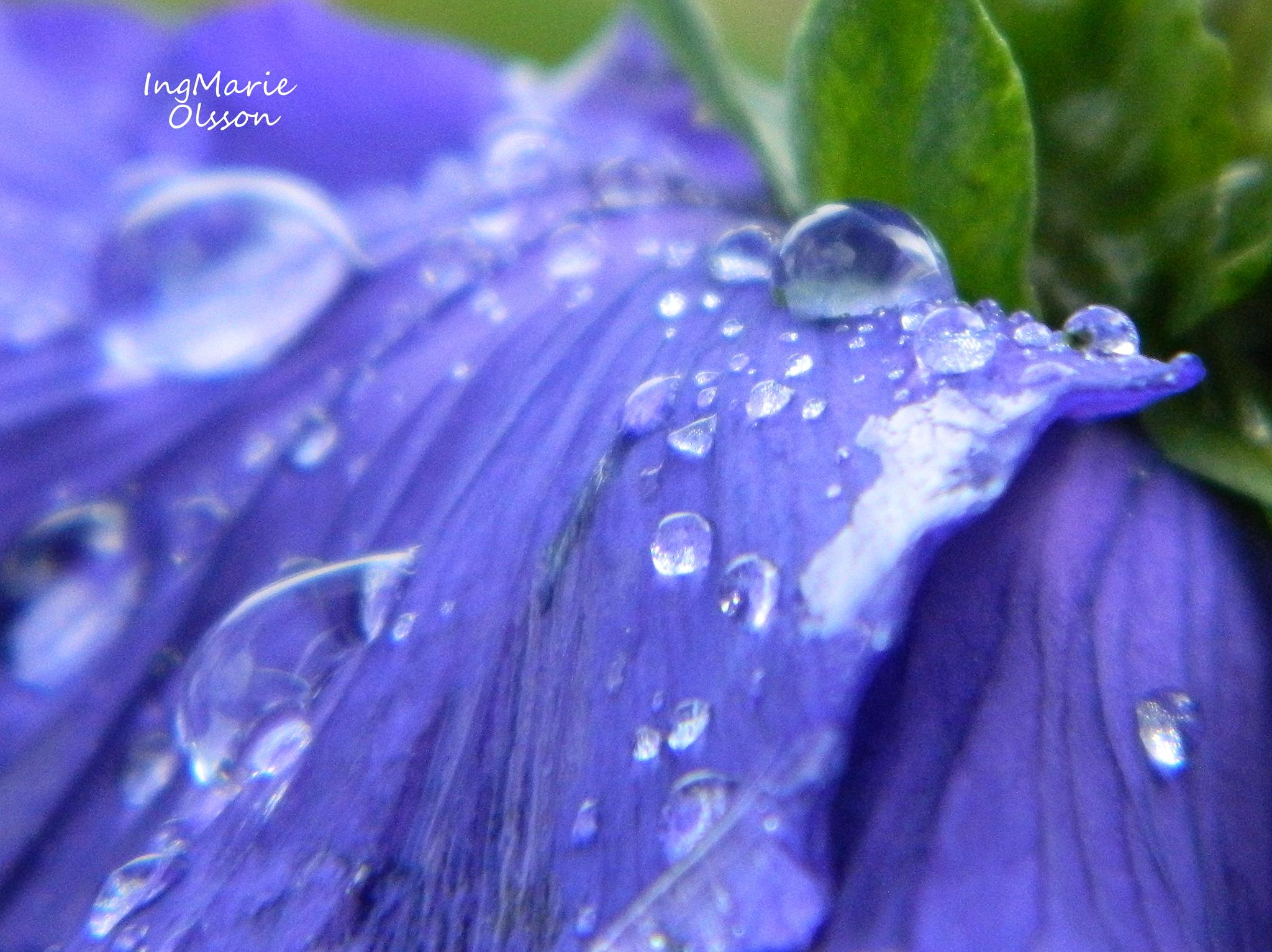 Bluedrops by ingmarie.olsson.184