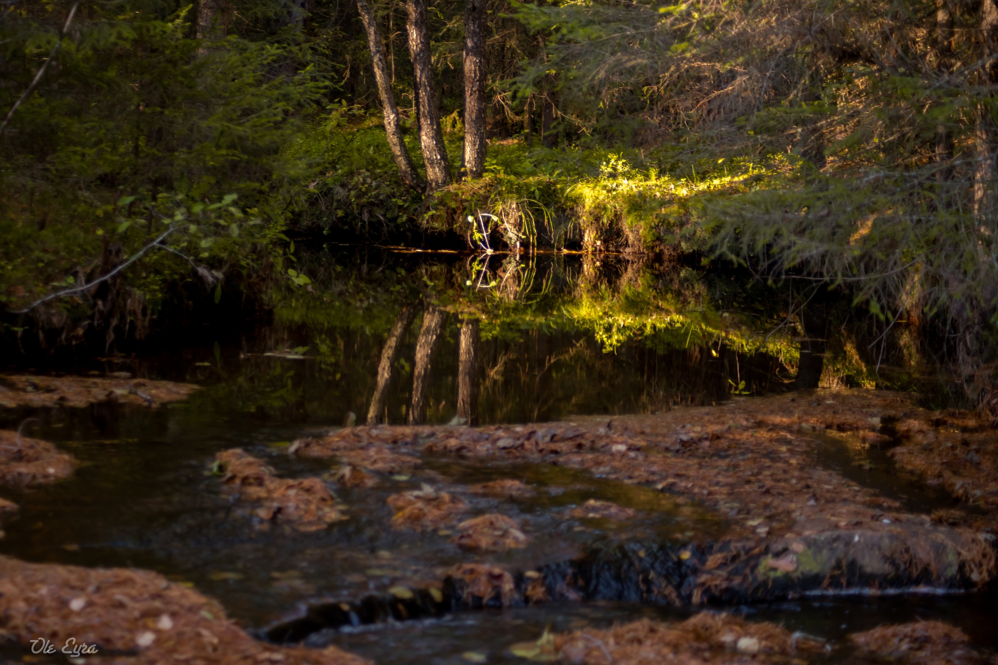 Glade by the river pond by Ole Morten Eyra