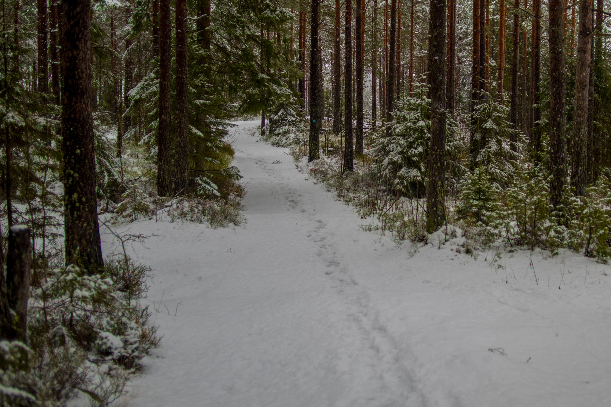 Crossroad by Ole Morten Eyra