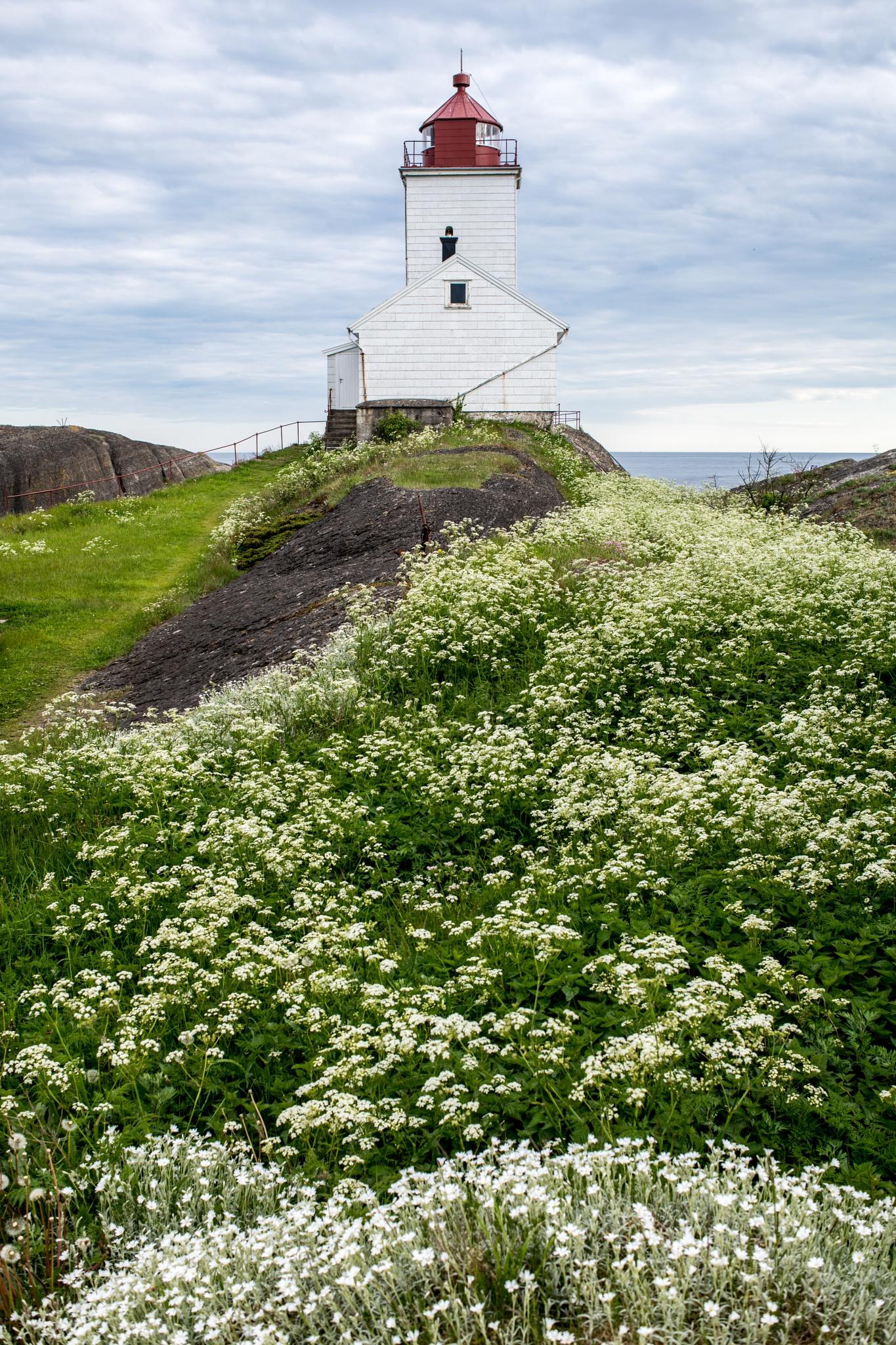 Photo in Nature #lighthouse #langøytangen #langøytangen fyr #langesund #telemark