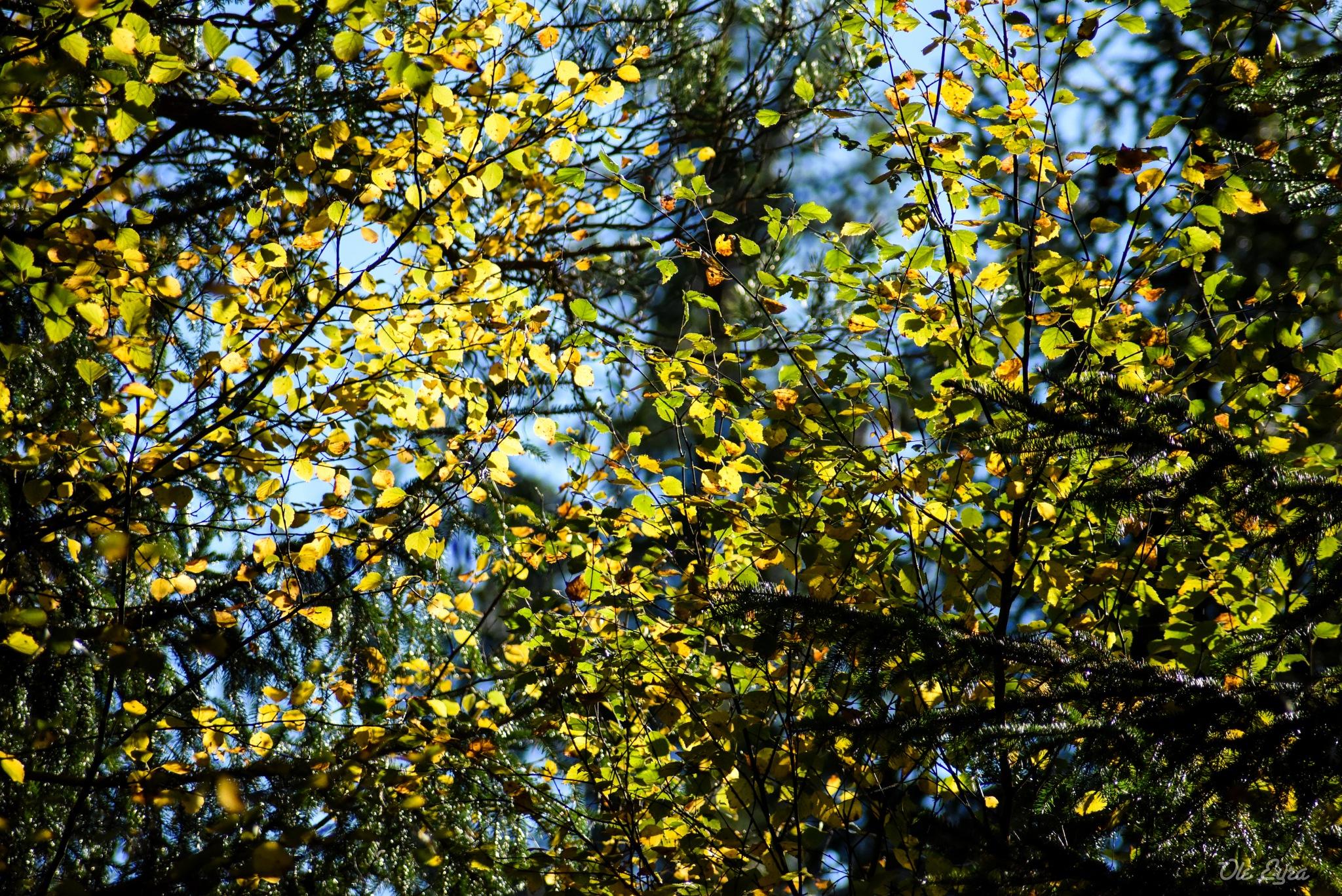 Autumn by Ole Morten Eyra