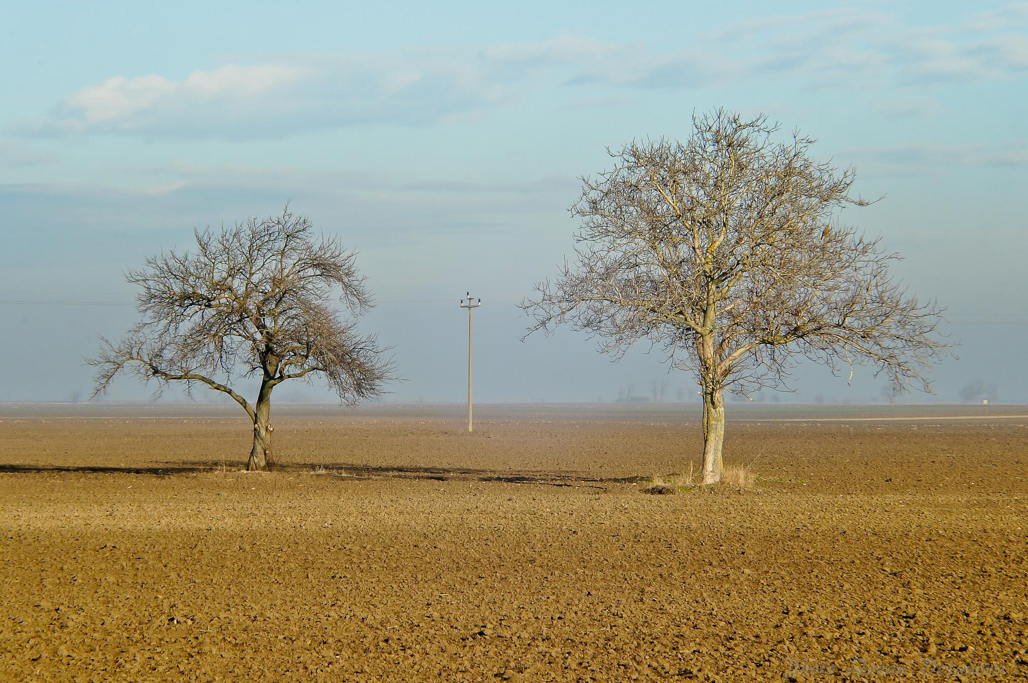Trees by Zoran Dejanović